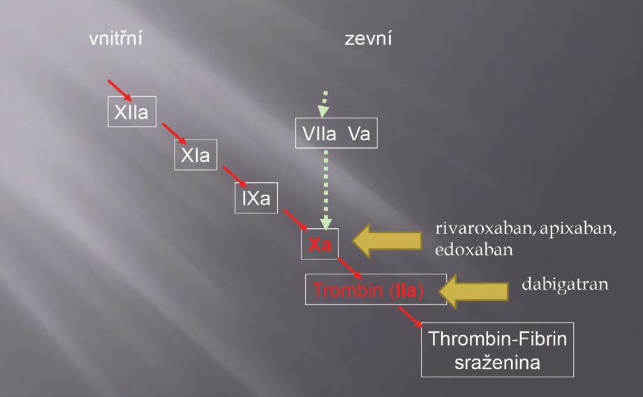 Schéma koagulační kaskády