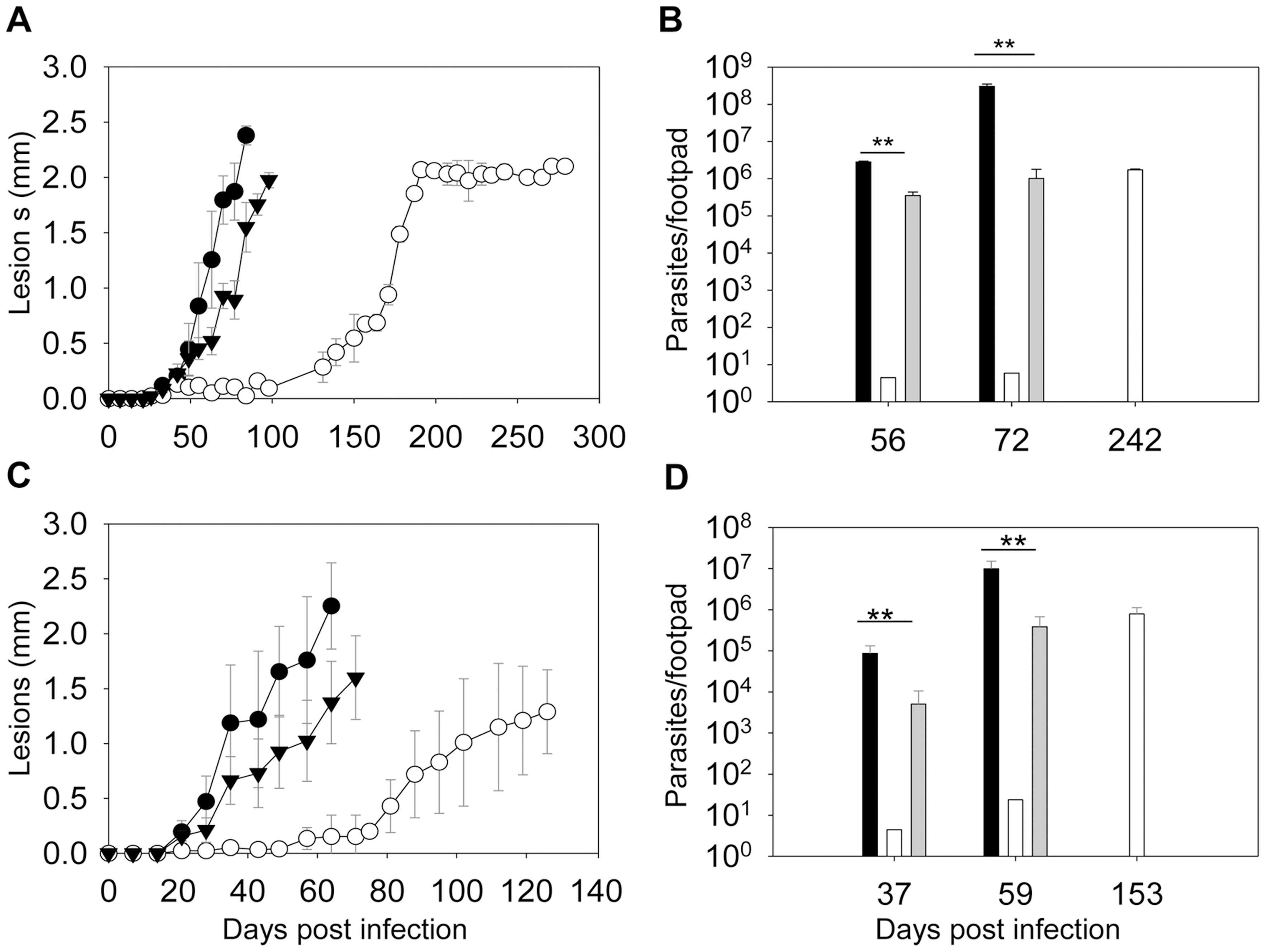 <i>C14dm</i><sup>−</sup> mutants show severely attenuated virulence in BALB/c mice.