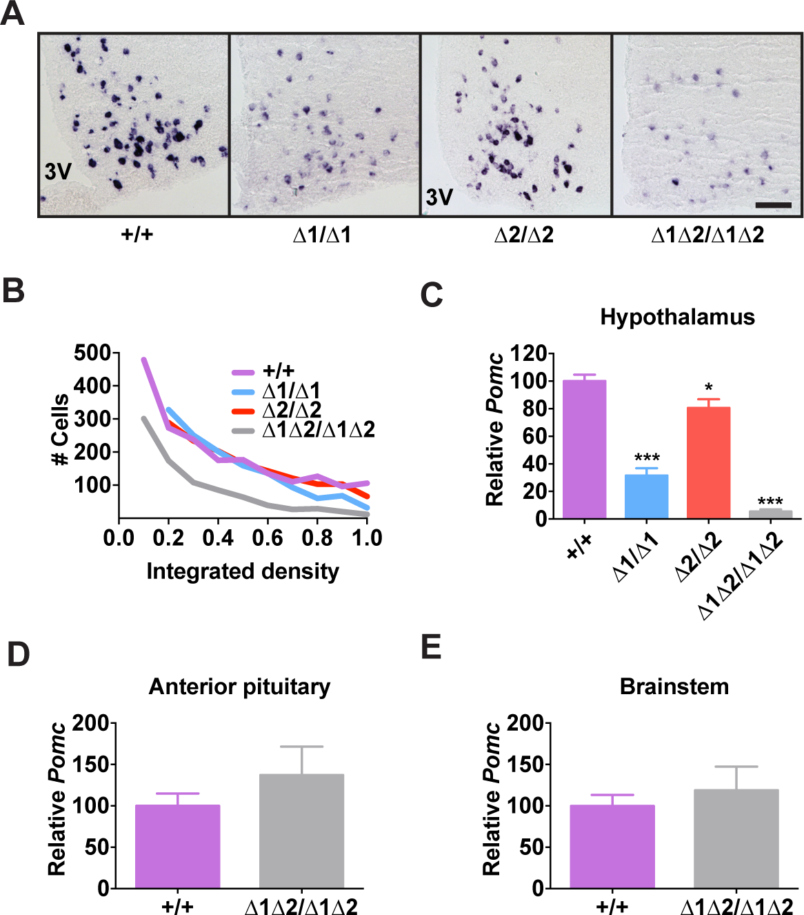 <i>Pomc</i> expression in adult nPE mutant mice.