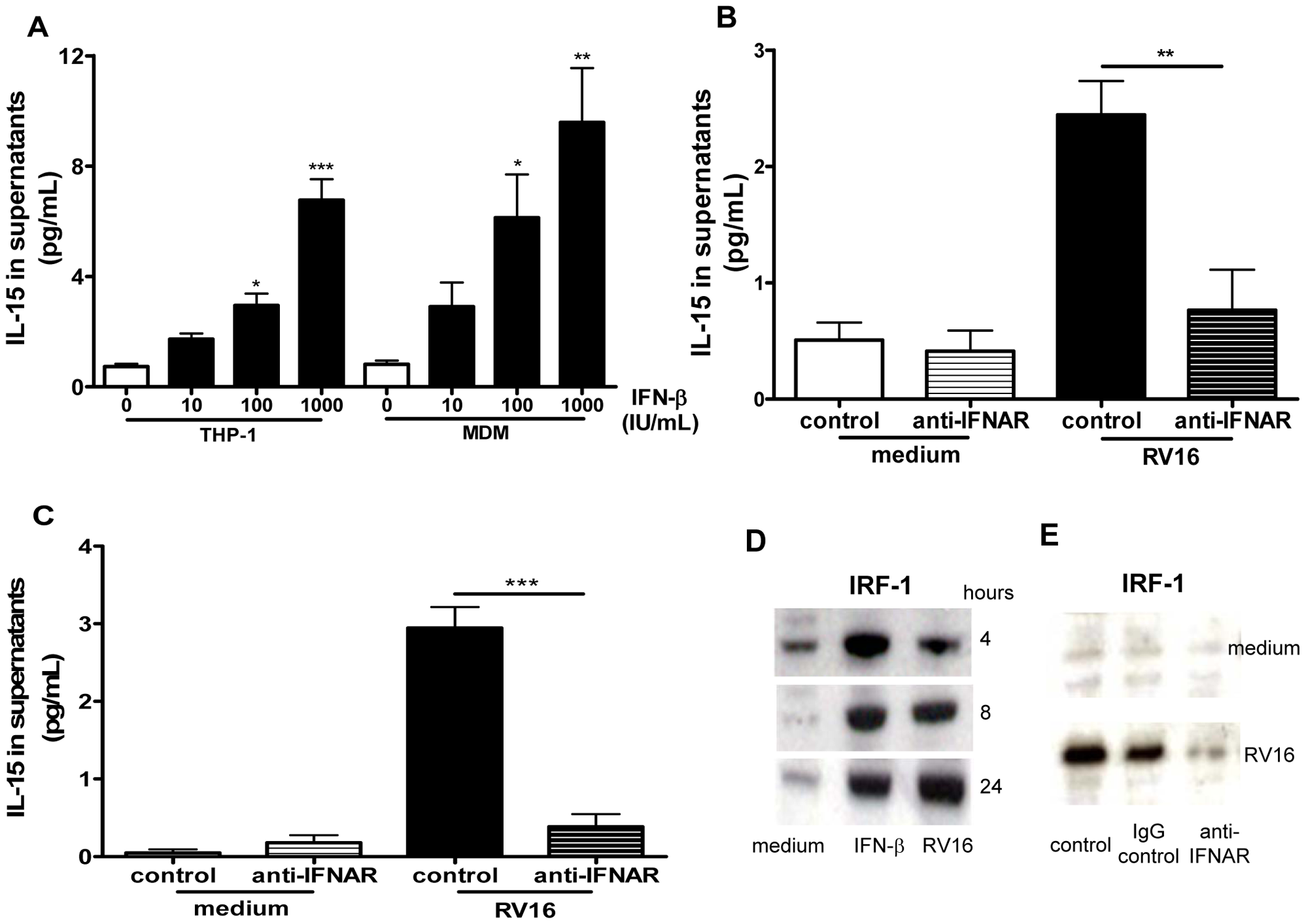 IFN-β induces IL-15 in macrophages and rhinovirus induction is via IFN-αβ receptor signalling.