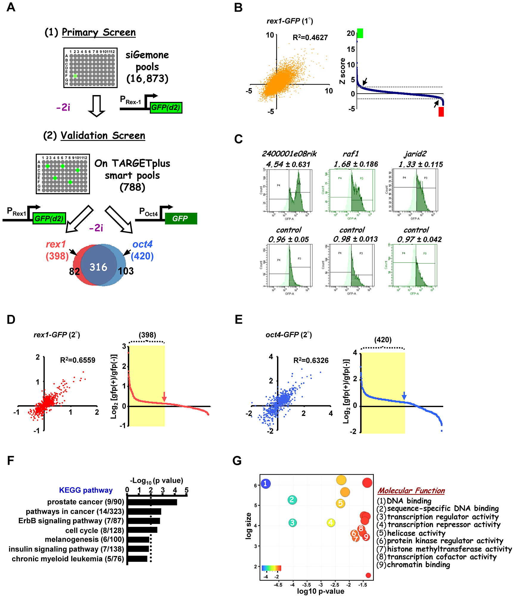 A genome-wide RNAi library screen identifies factors involved in signal-dependent embryonic stem cell differentiation.