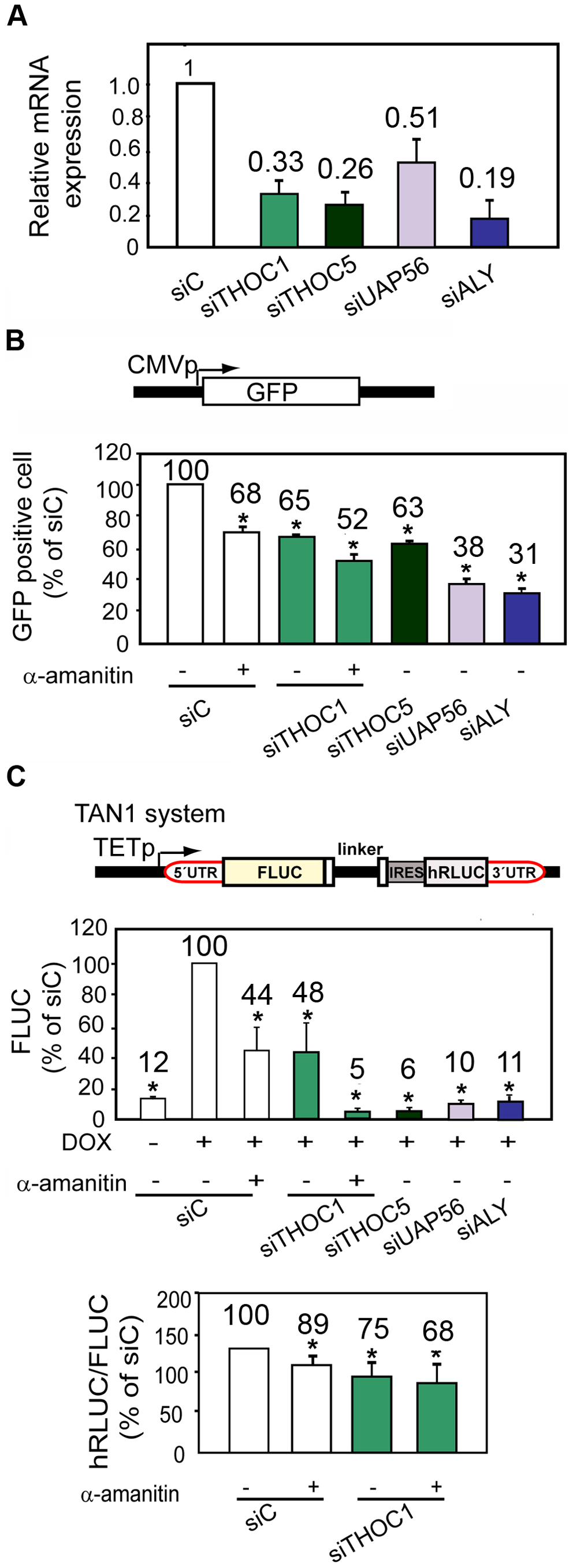THO/TREX depletion impairs transcription elongation.