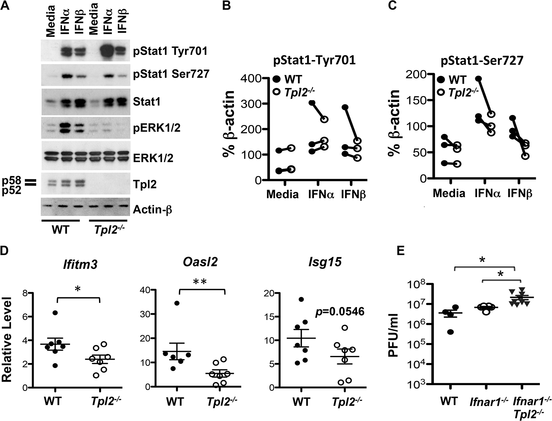 Tpl2 mediates IFN signaling and induction of ISGs.
