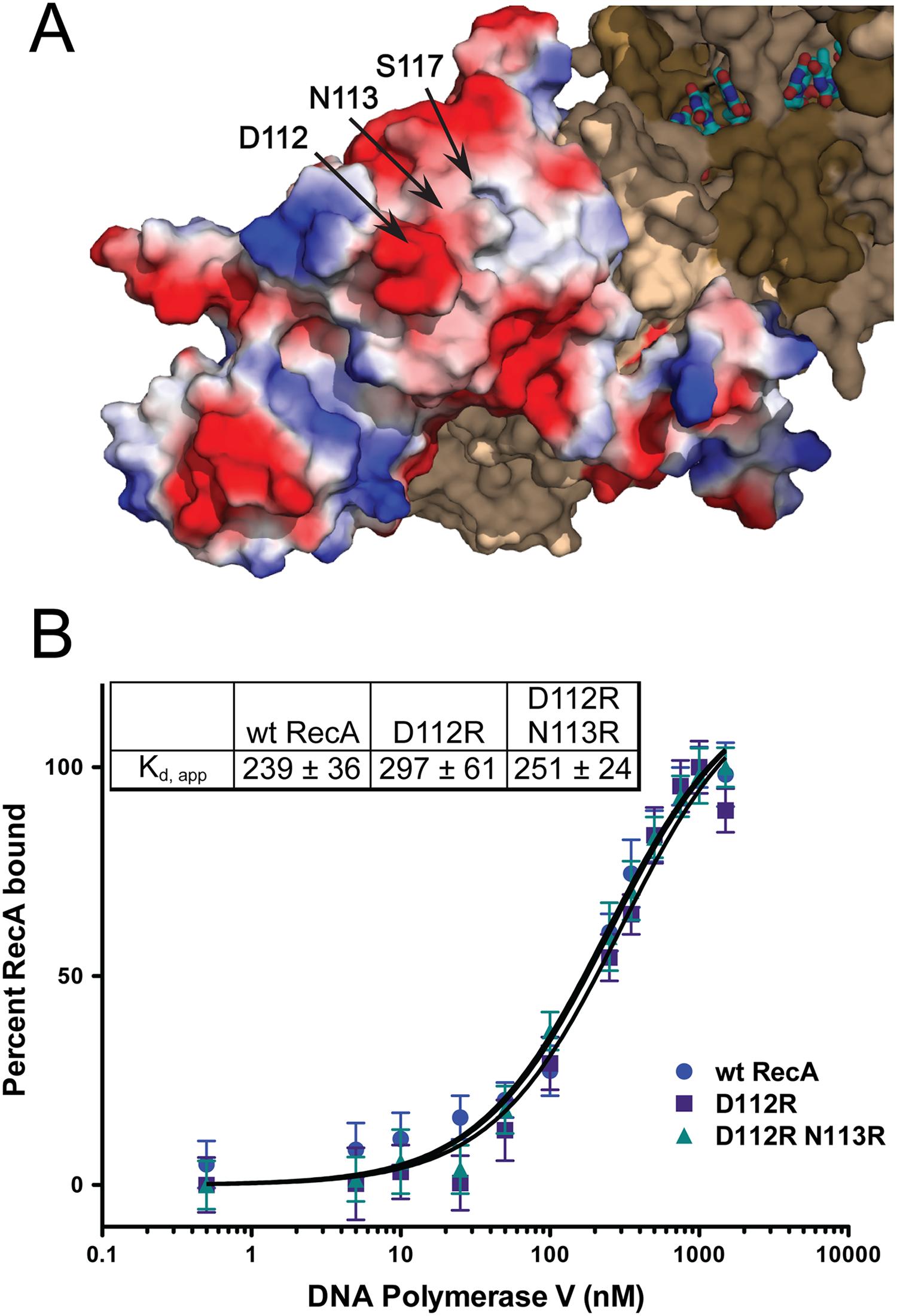 RecA D112R and D112R N113R exhibit wild-type RecA binding affinities for pol V.