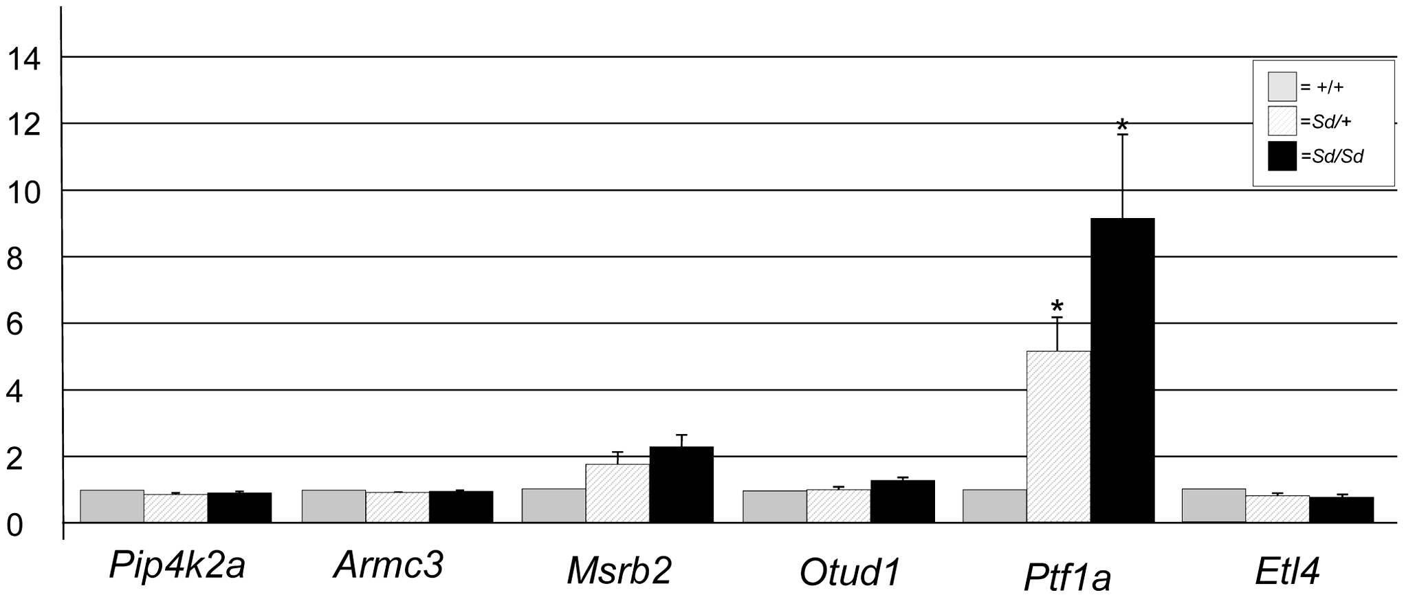 Gene expression at E9.5 in <i>Sd</i> mutant embryos.