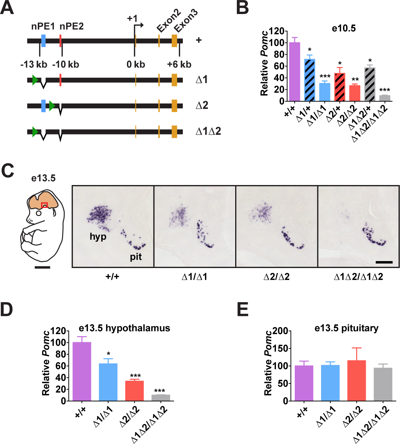 <i>Pomc</i> enhancers nPE1 and nPE2 function cooperatively.