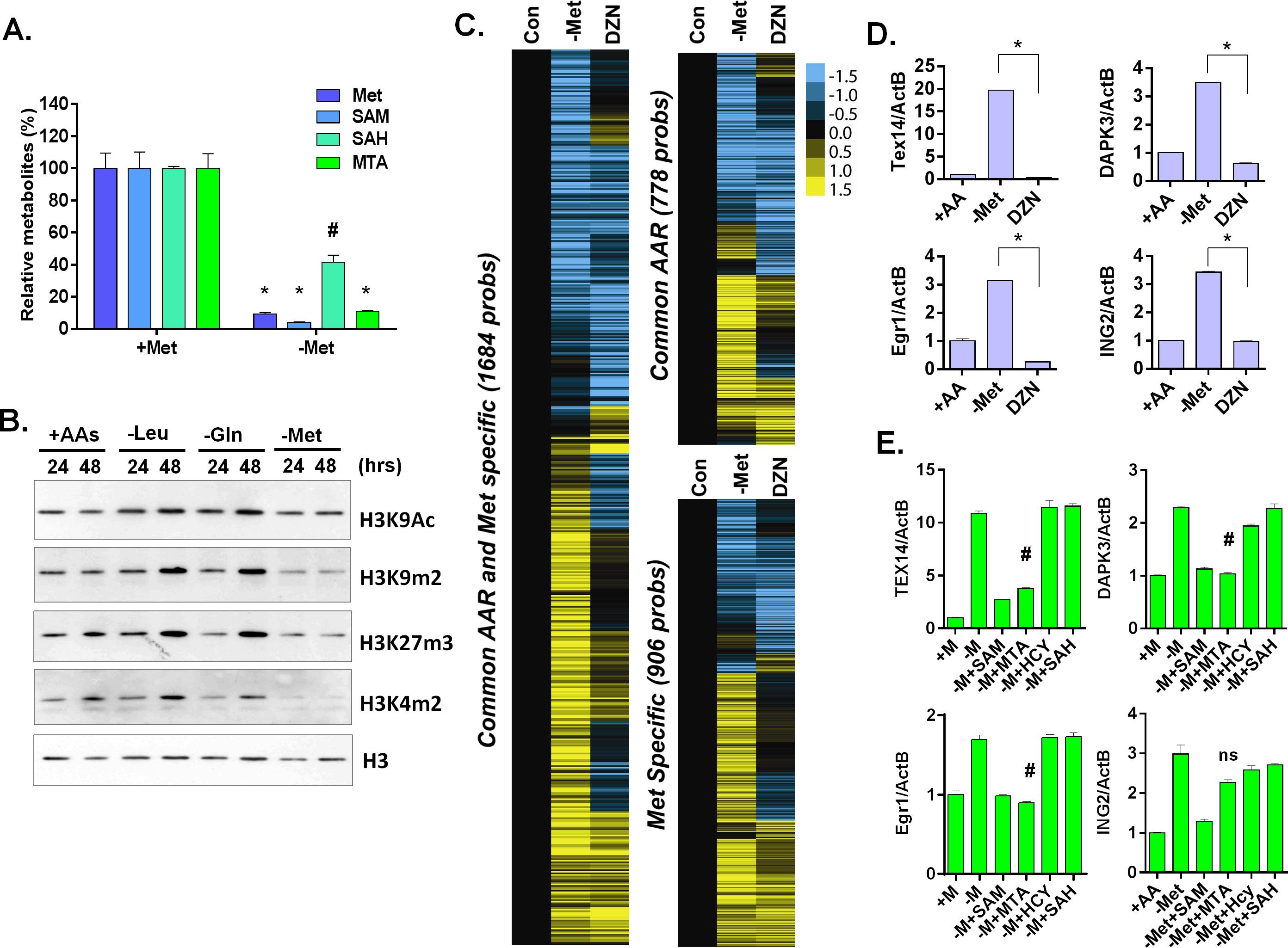 Methionine deprivation reduces the histone methylations.