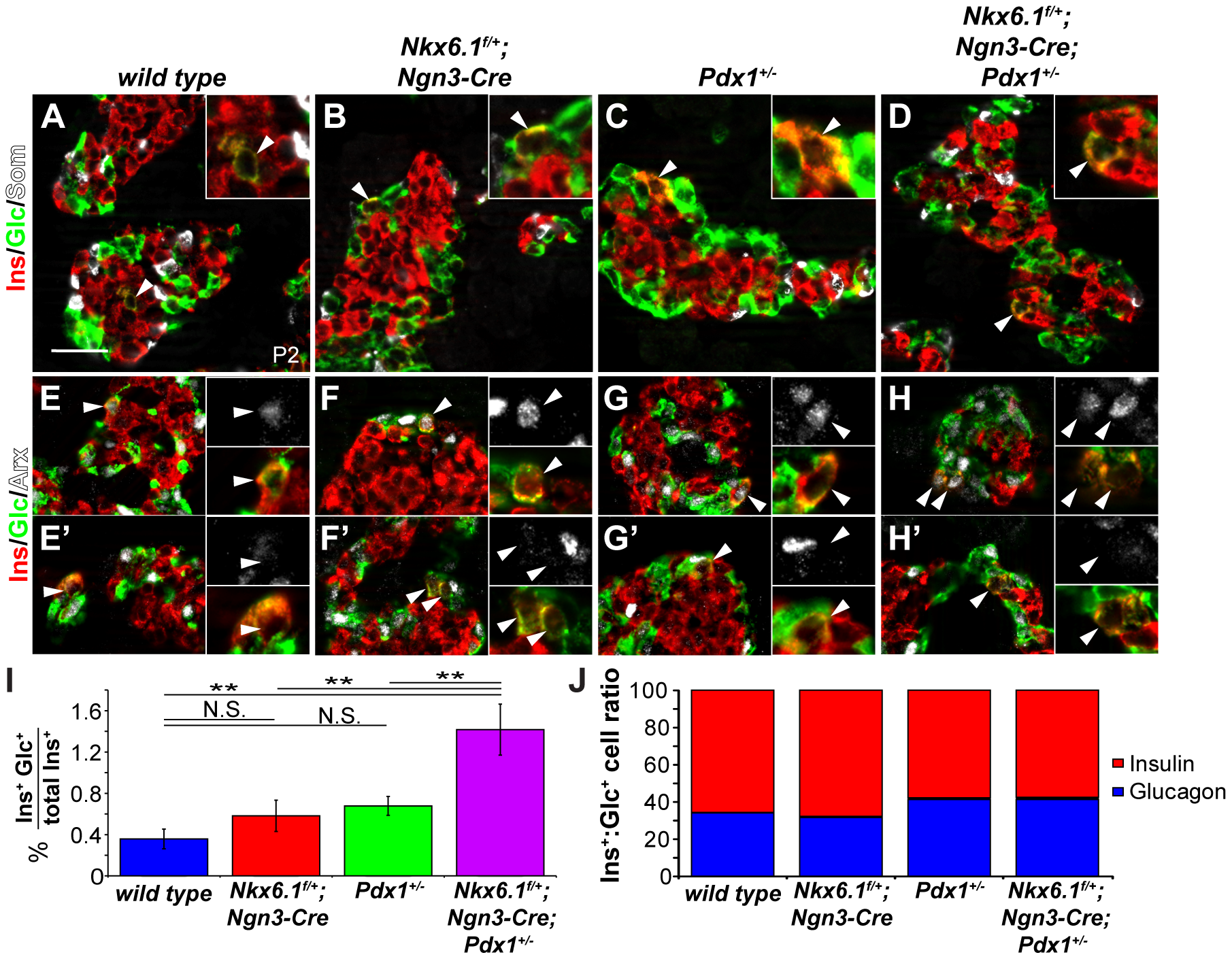 <i>Nkx6.1</i> and <i>Pdx1</i> collectively stabilize beta cell identity.