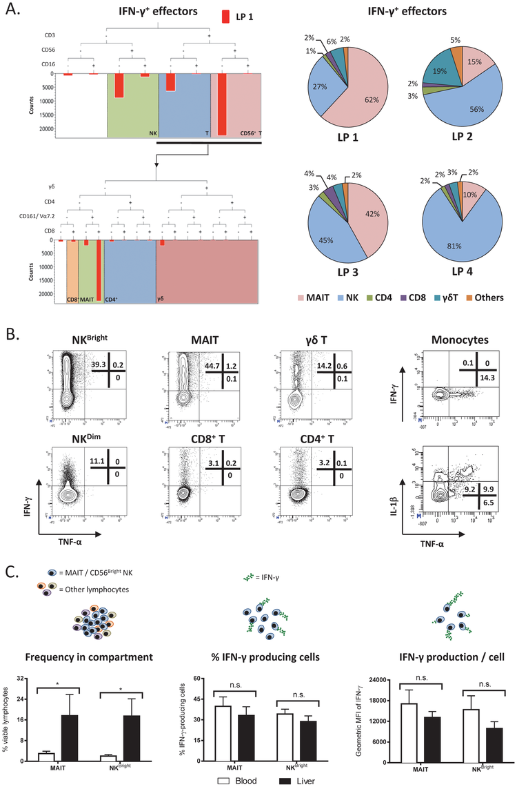 Characterization of intrahepatic immune cell subsets that produce IFN-γ upon TLR8 agonist stimulation.