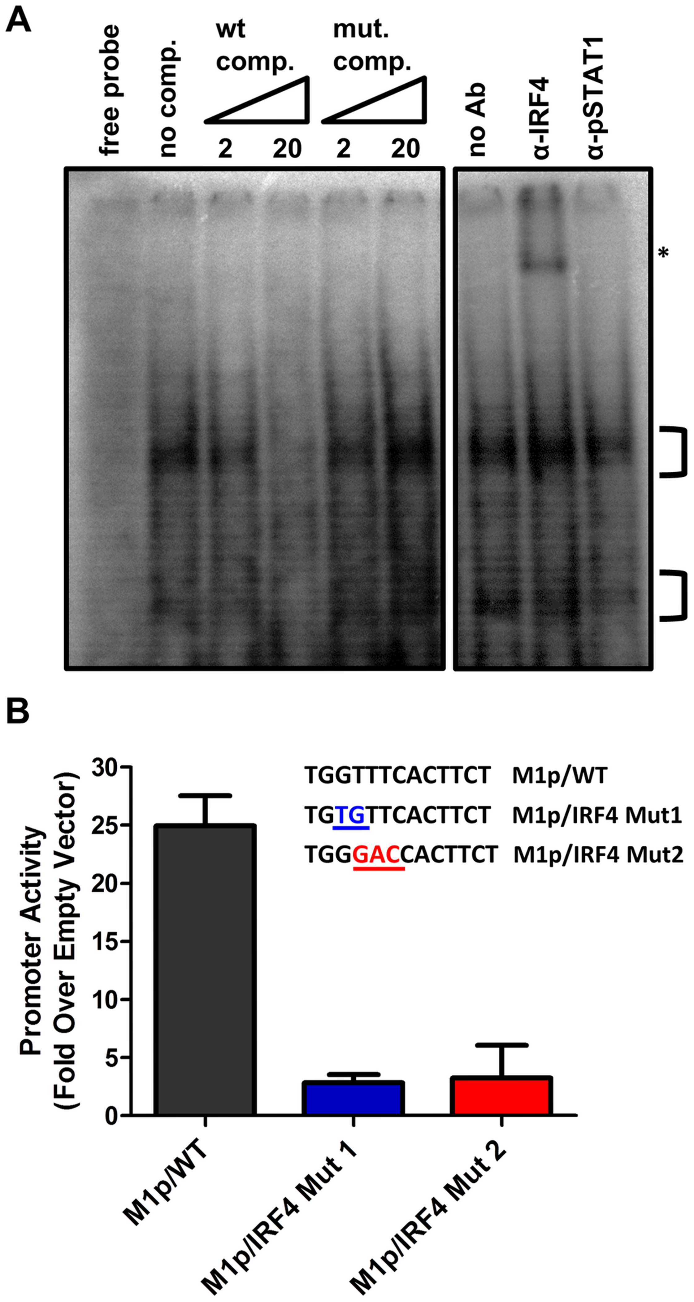 Basal activity of the M1 promoter is dependent on IRF4 binding.