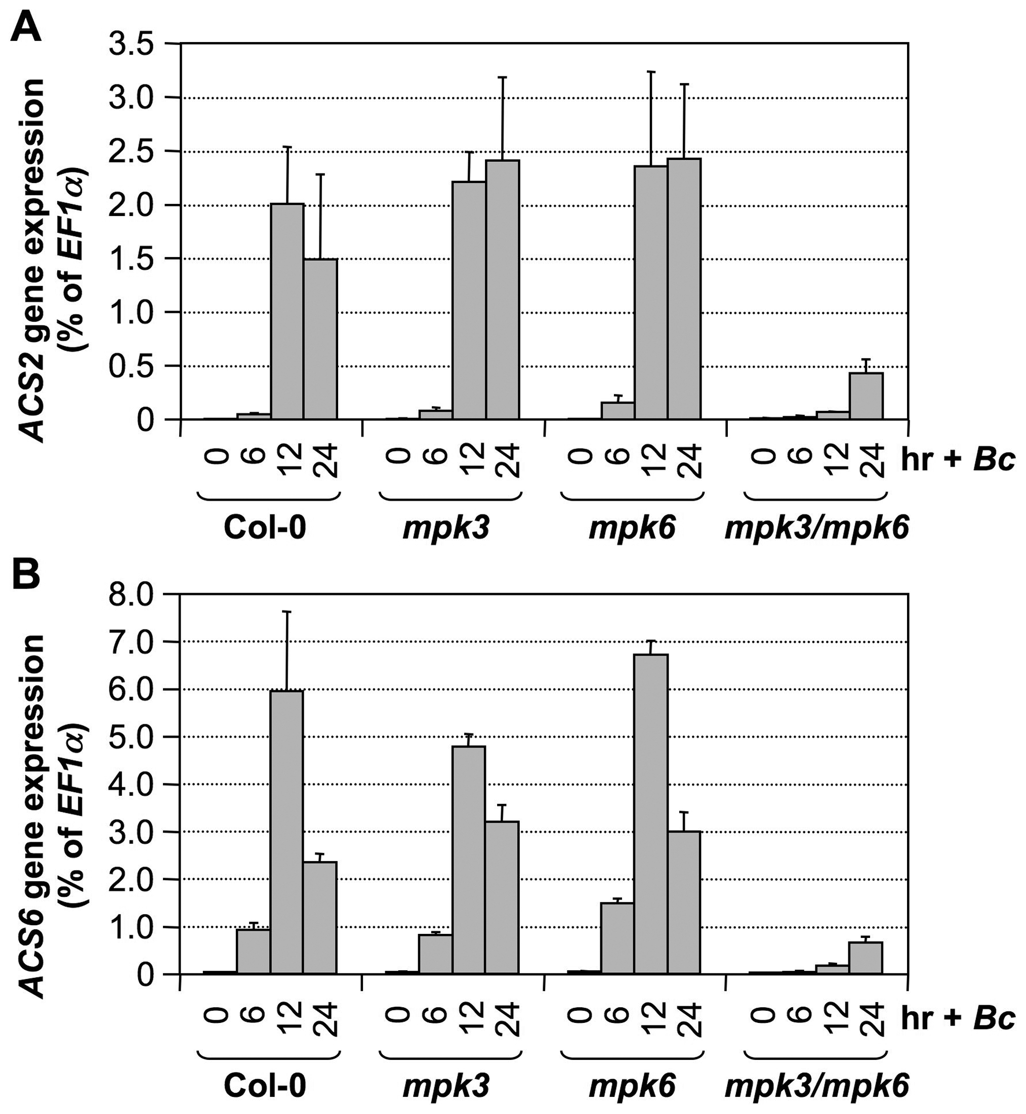 <i>B. cinerea</i> induced <i>ACS2</i> and <i>ACS6</i> gene activation is dependent on functional MPK3 and MPK6.