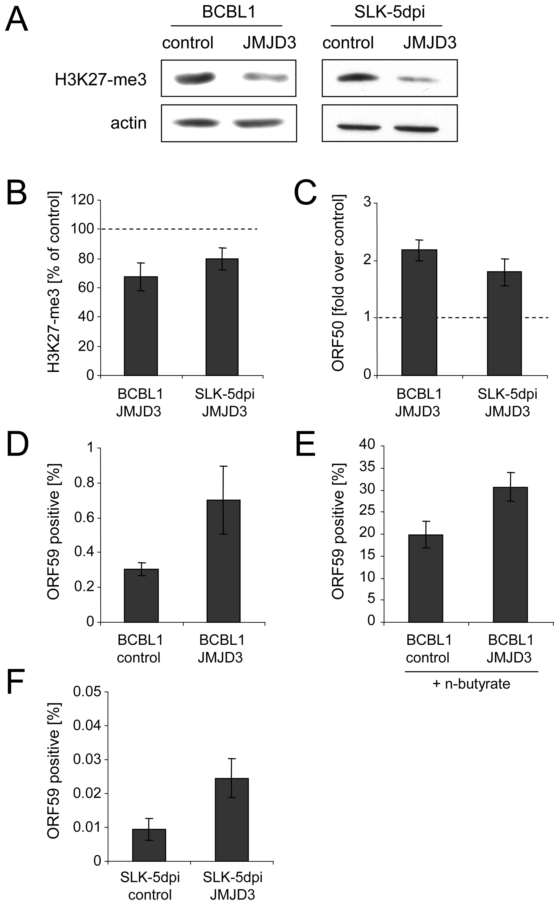 Consequences of JMJD3 expression in BCBL1 and <i>de novo</i> infected SLK cells.