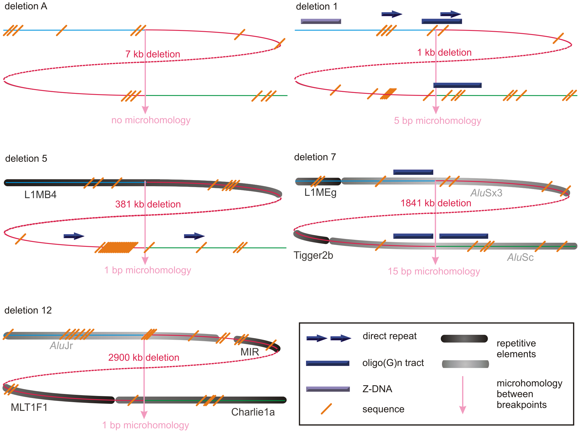 Schematic representations of the genomic architecture for 5 exemplary regulatory and <i>FOXL2</i>-encompassing deletion.