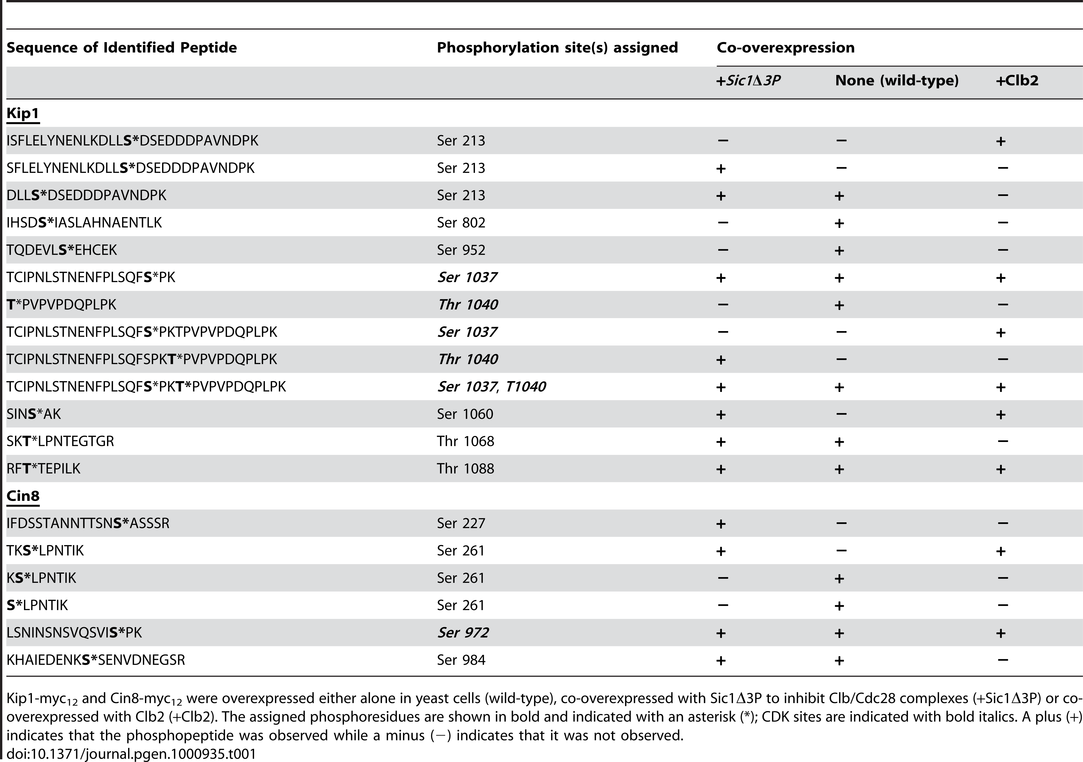 List of phosphopeptides generated from Kip1 and Cin8 and identified during LC/MS/MS analysis.