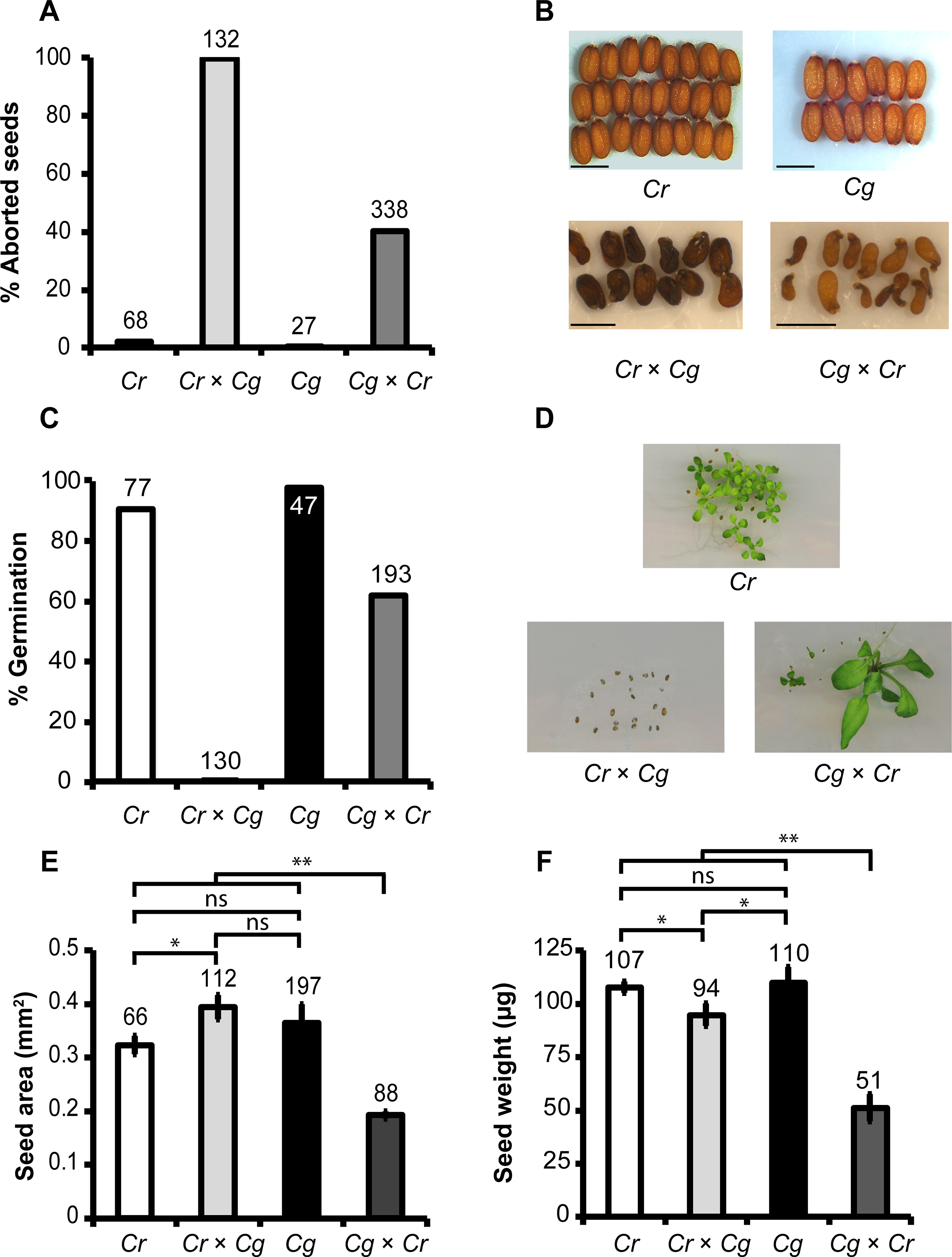 Cross direction-dependent incompatibility affects development of <i>Capsella rubella</i> and <i>C</i>. <i>grandiflora</i> hybrid seeds.