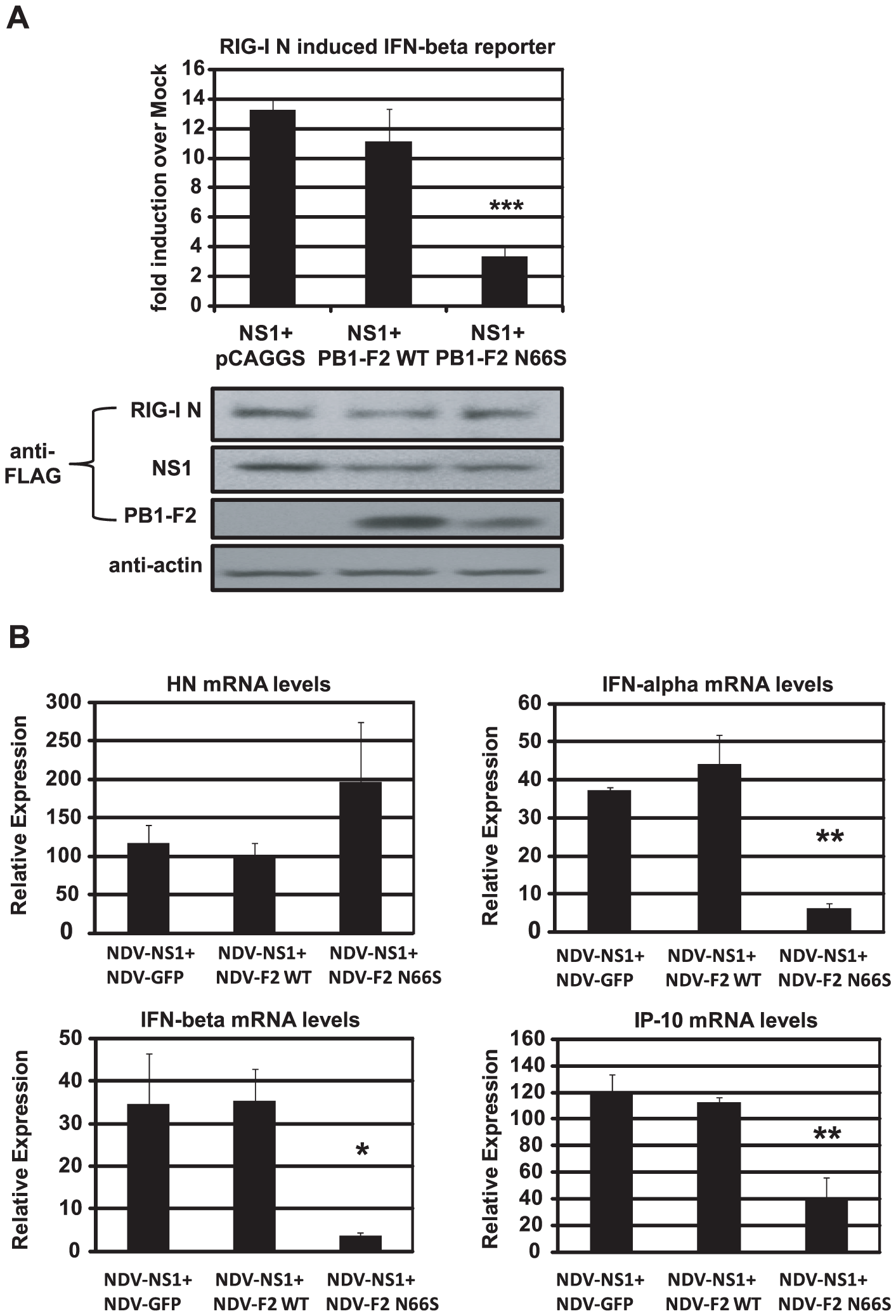 PB1-F2 N66S further enhances NS1 mediated IFN antagonism in an overexpression system.