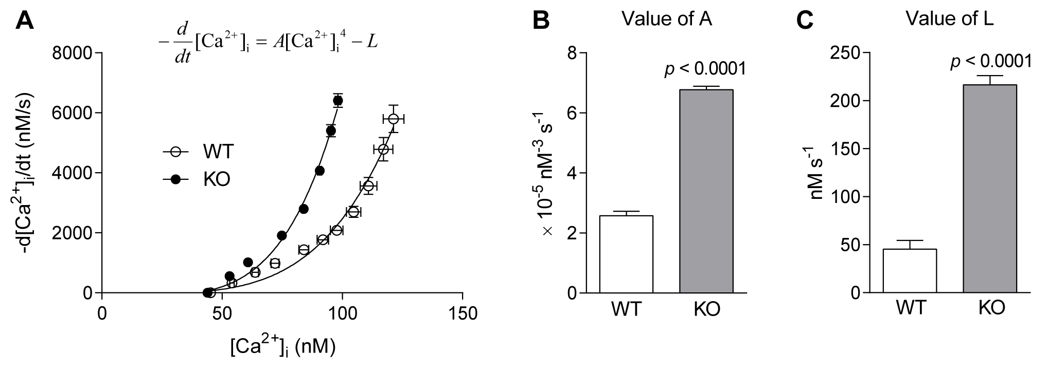 SR pump function in FDB fibres of WT and <i>Actn3</i> KO mice.