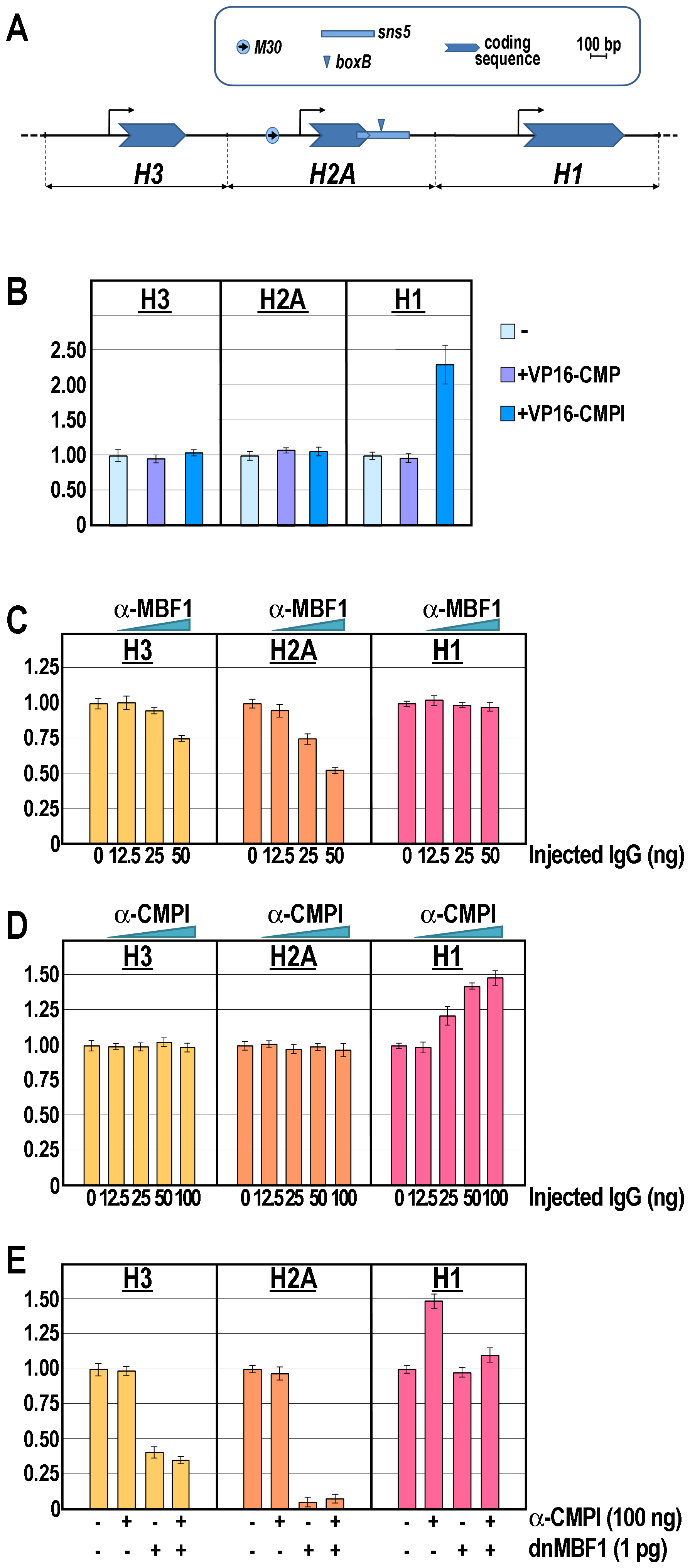 Knock-down of the <i>M30</i>-enhancer and/or <i>sns5</i>-insulator functions and effect on the endogenous early histone gene transcription.