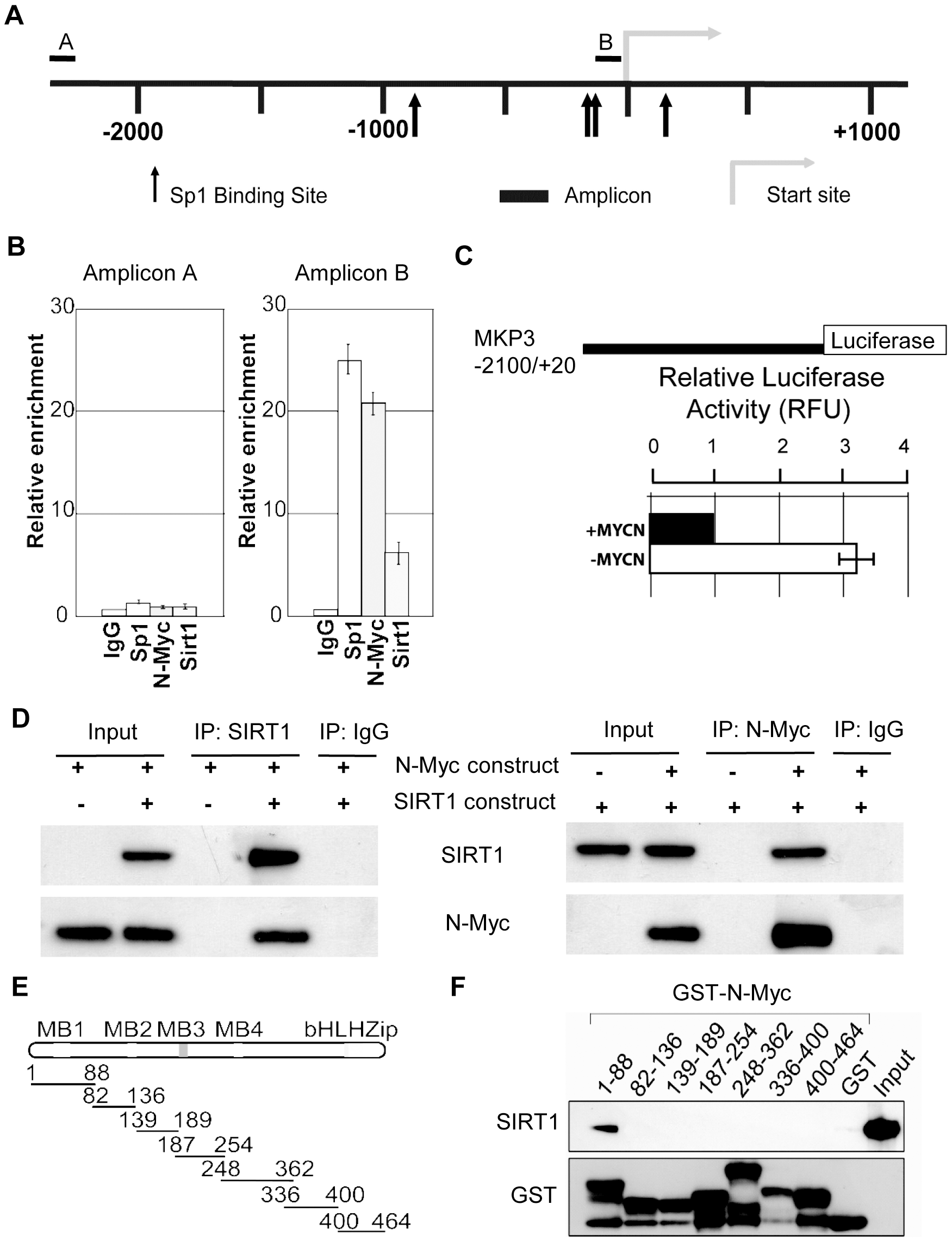 SIRT1 and N-Myc repress MKP3 gene transcription by forming a transcriptional repressor complex at MKP3 gene core promoter.