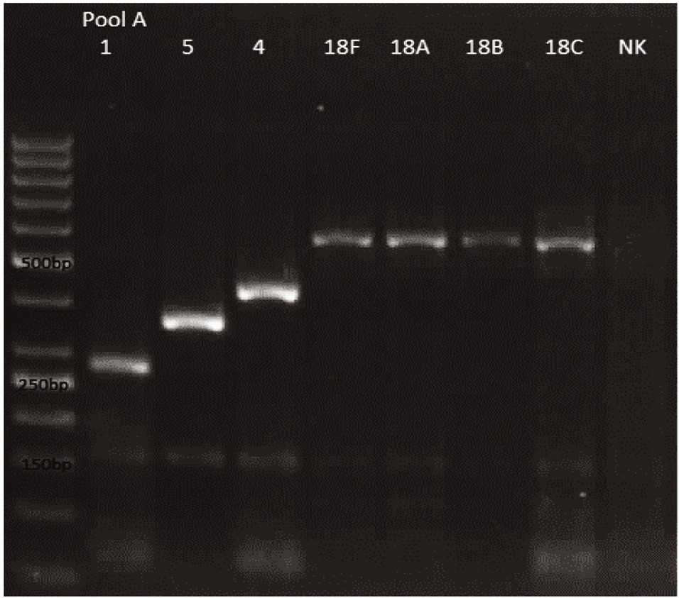 mPCR pool A Dráha 1: 50bp DNA Ladder Dráha 2: <i>S. pneumoniae</i> sérotyp 1 (280bp) Dráha 3: <i>S. pneumoniae</i>  sérotyp 5 (362bp) Dráha 4: <i>S. pneumoniae</i>  sérotyp 4 (430bp) Dráha 5: <i>S. pneumoniae</i>  sérotyp 18F (573bp) Dráha 6: <i>S. pneumoniae</i>  sérotyp 18A (573bp) Dráha 7: <i>S. pneumoniae</i>  sérotyp 18B (573bp) Dráha 8: <i>S. pneumoniae</i>  sérotyp 18C (573bp) Dráha 9: negativní kontrola Dráha 2–8: pozitivní produkt cpsA (160bp)<br> Fig. 1. mPCR pool A Lane 1: 50bp DNA Ladder Lane 2: <i>S. pneumoniae</i>  serotype 1 (280bp) Lane 3: <i>S. pneumoniae</i>  serotype 5 (362bp) Lane 4: <i>S. pneumoniae</i>  serotype 4 (430bp) Lane 5: <i>S. pneumoniae</i>  serotype 18F (573bp) Lane 6: <i>S. pneumoniae</i>  serotype 18A (573bp) Lane 7: <i>S. pneumoniae</i>  serotype 18B (573bp) Lane 8: <i>S. pneumoniae</i>  serotype 18C (573bp) Lane 9: negative control Lanes 2–8: positive product cpsA (160bp)