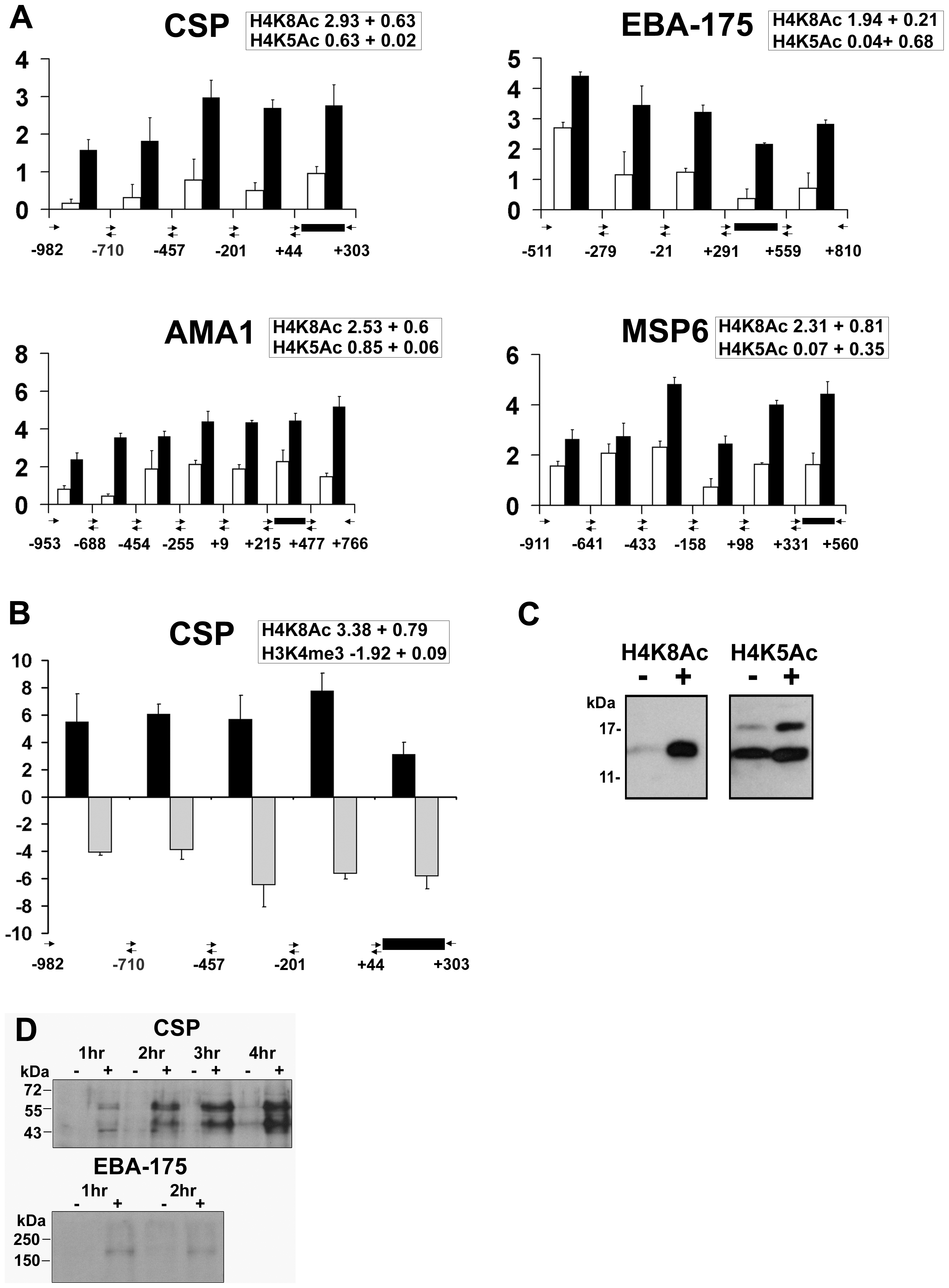 Apicidin induces histone hyperacetylation along promoter regions and protein expression of <i>P. falciparum</i> genes.