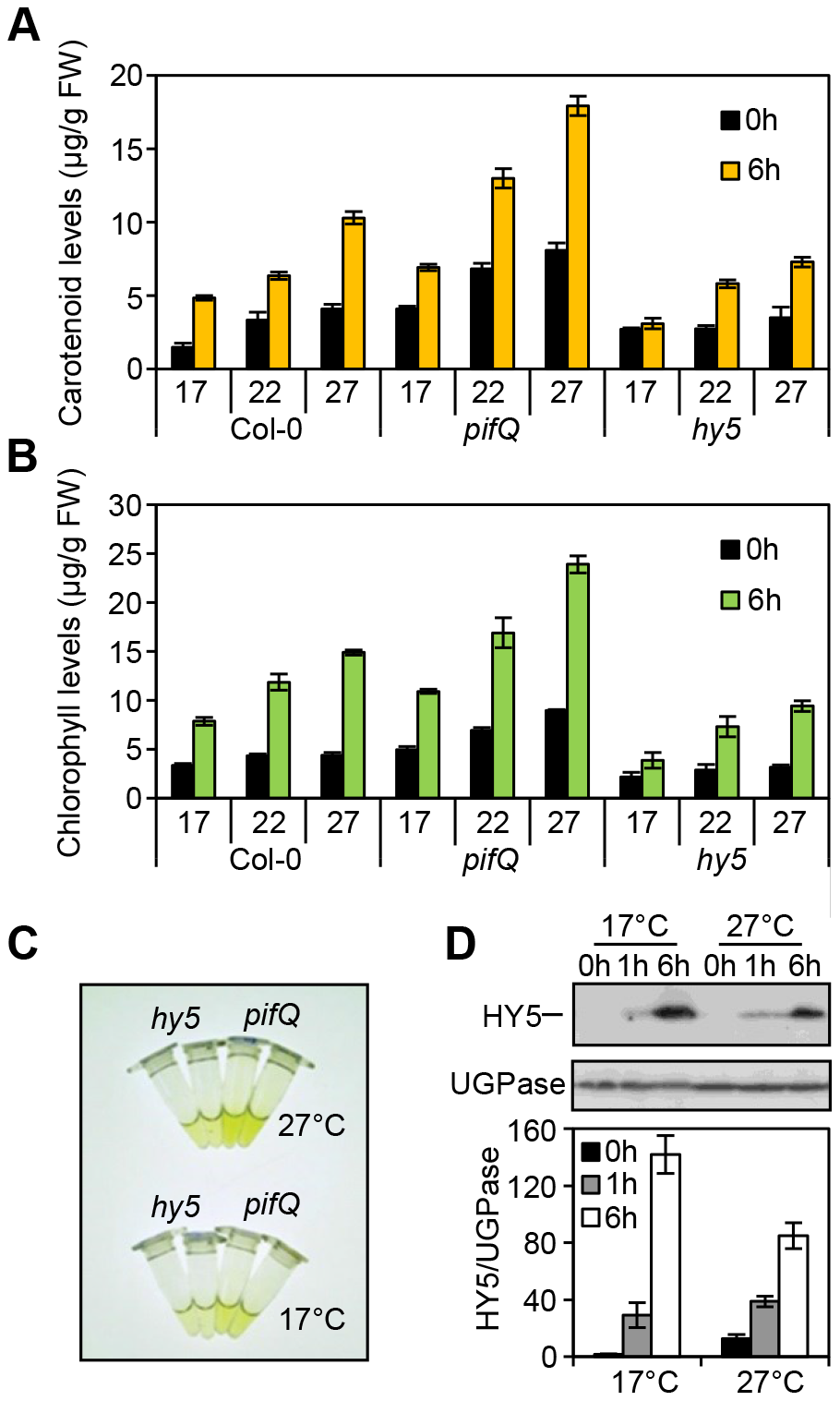 Photosynthetic pigment accumulation is temperature sensitive and dependent on HY5 and the PIFs.