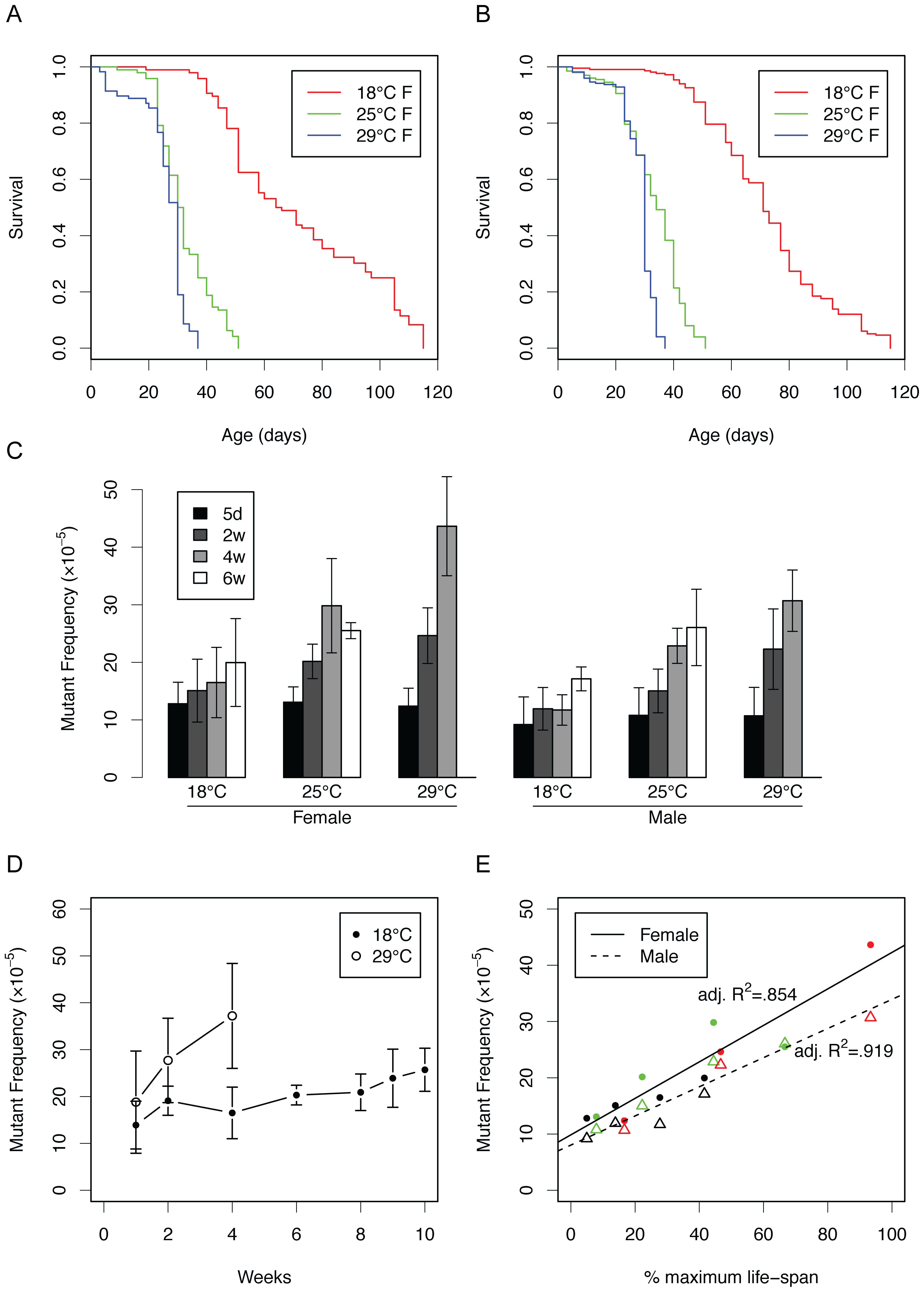 Somatic mutations as a function of life span at different temperatures.