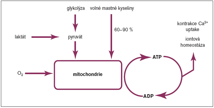 Schéma 2. Srdeční metabolismus za aerobních podmínek.