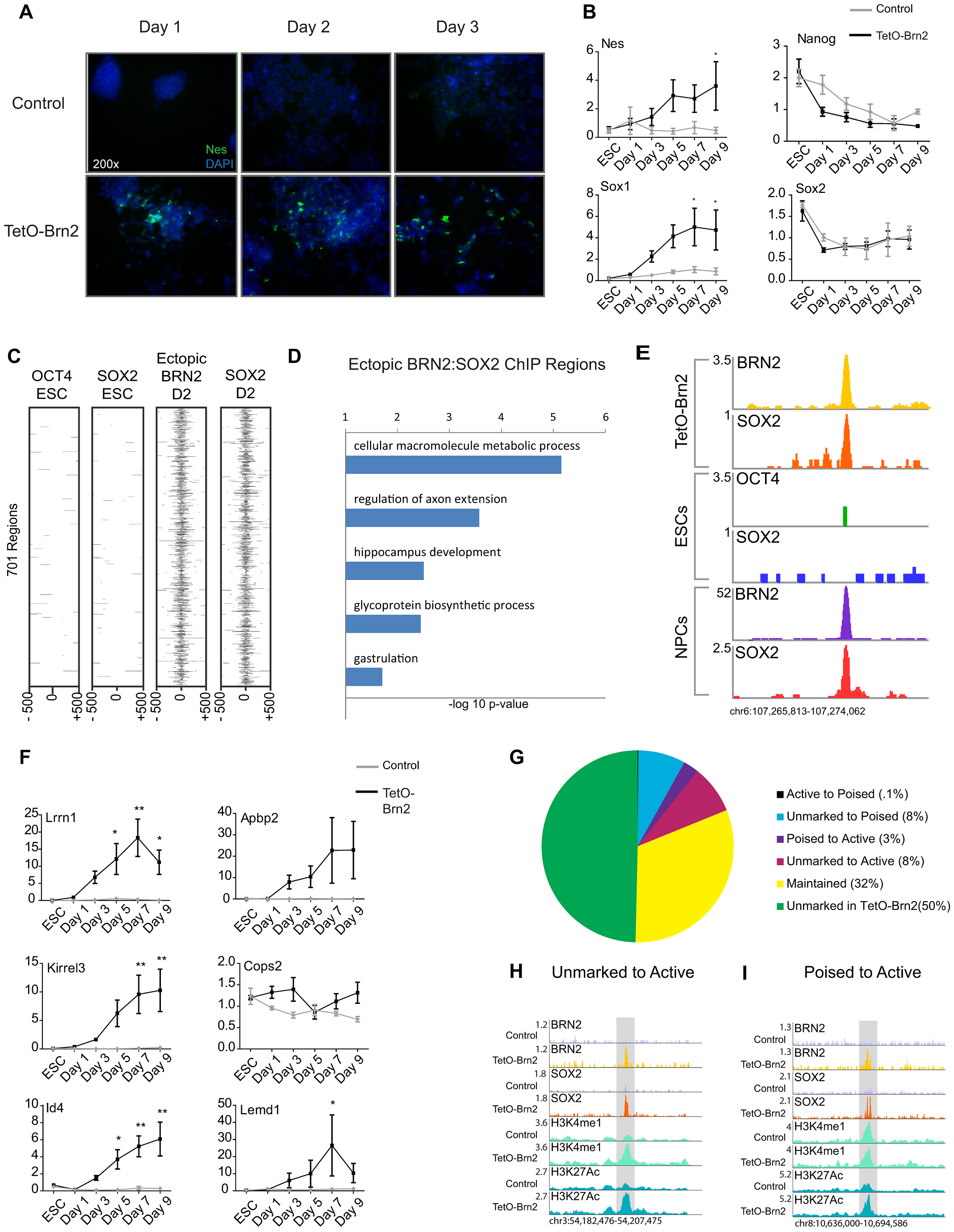 Brn2 biases ES cells towards neural differentiation.