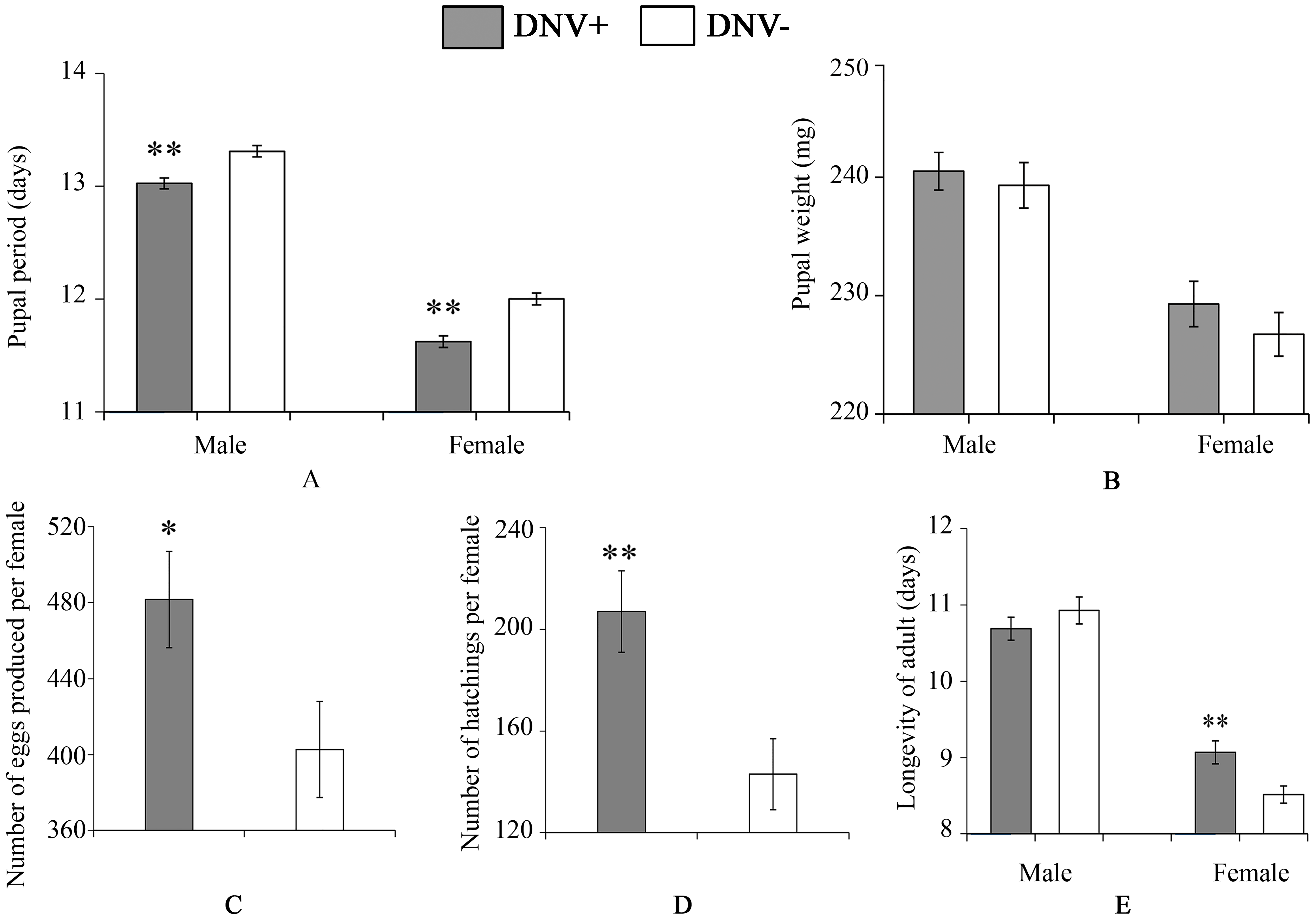 Pupal and adult life-history parameters of DNV− and DNV+ cotton bollworms.