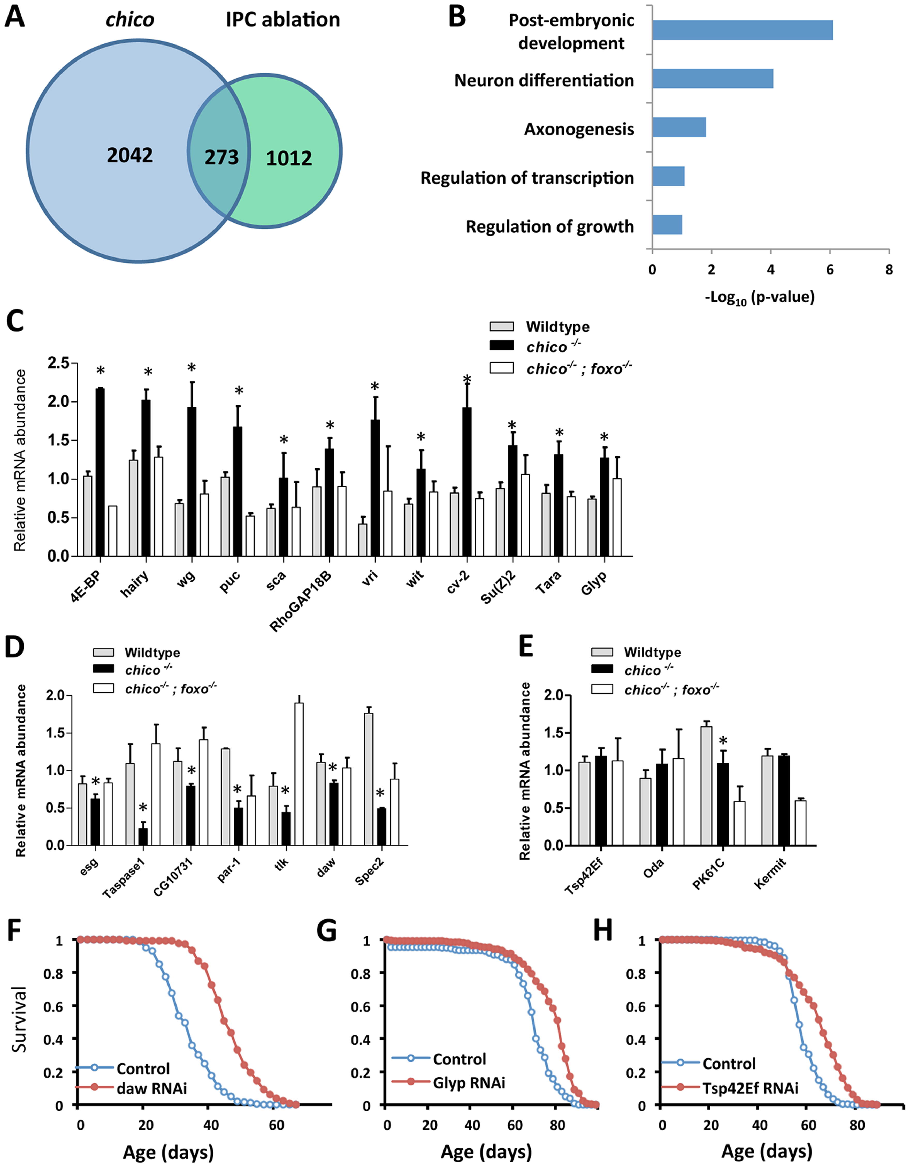ChIP-Seq to identify dFOXO direct target genes and lifespan screen for 23 selected candidates.