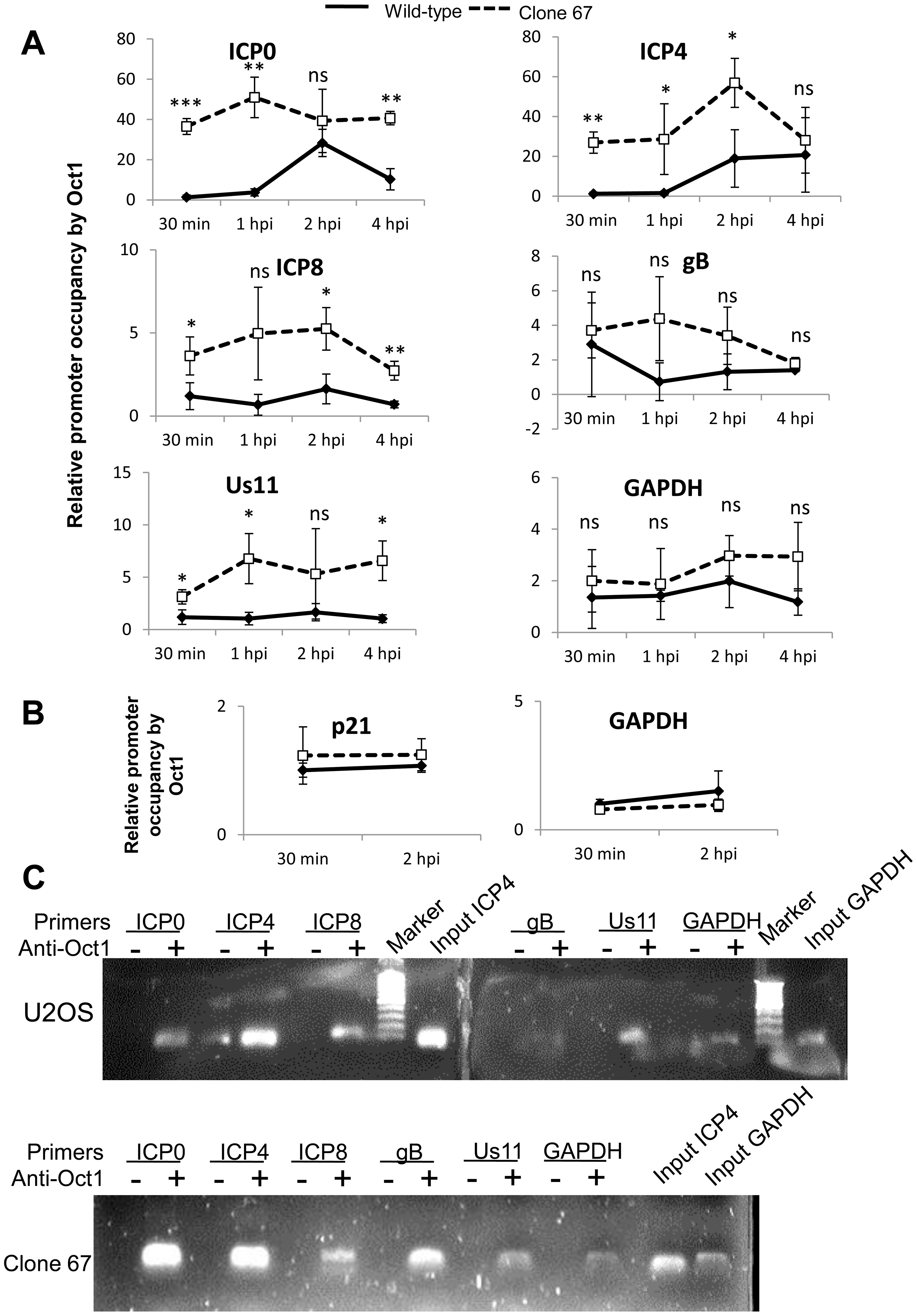 IFI16 prevents Oct1 accumulation at HSV-1 promoters.