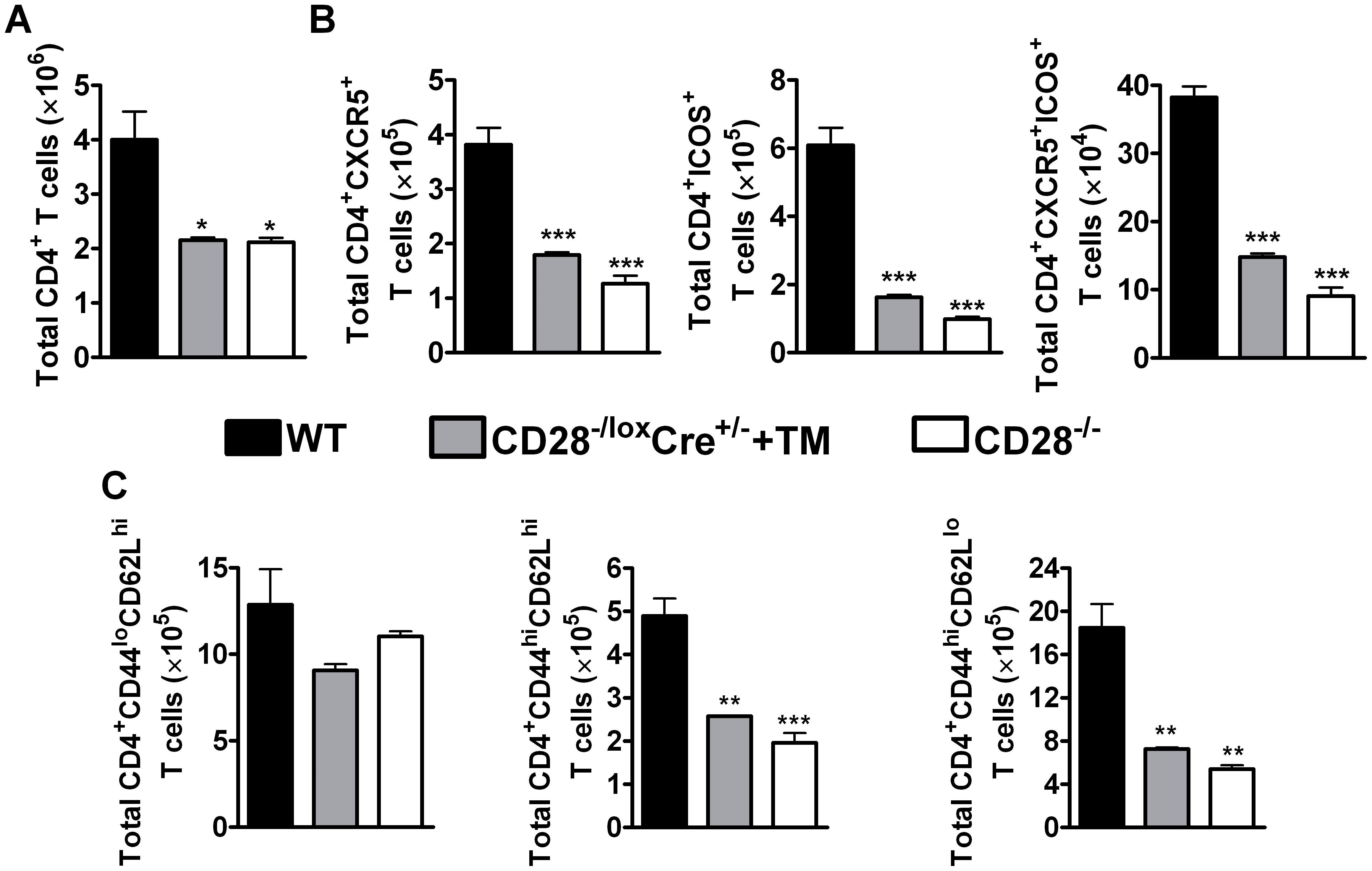 CD28 is necessary for development of T<sub>FH</sub> cells and optimal activation of CD4<sup>+</sup> T cells.