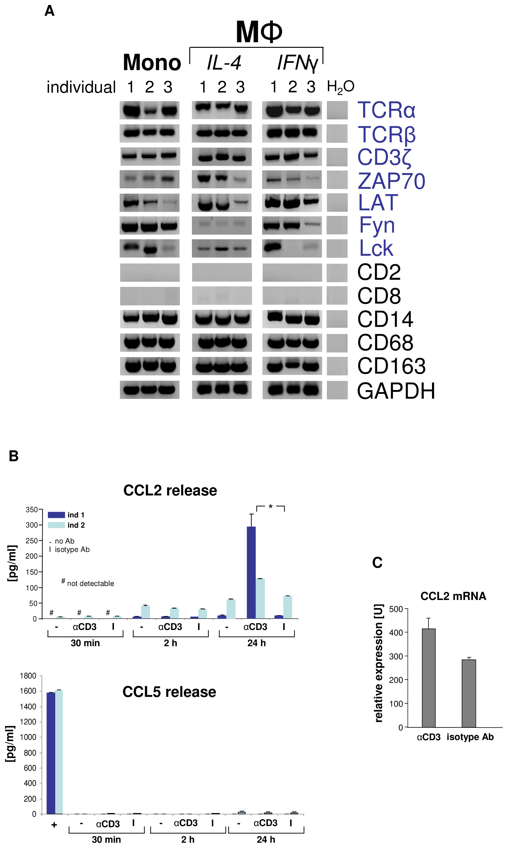 Engagement of the macrophage TCRαβ induces CCL2 release.
