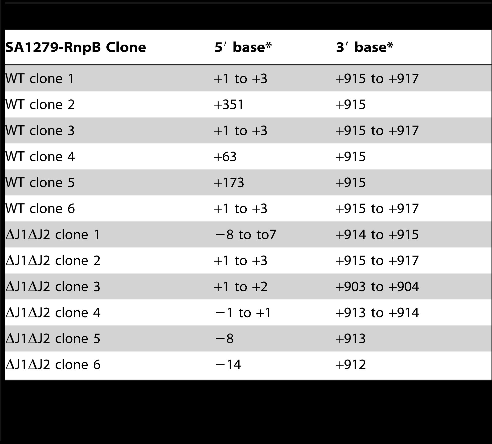 Sequencing circularised SA1279-RnpB.