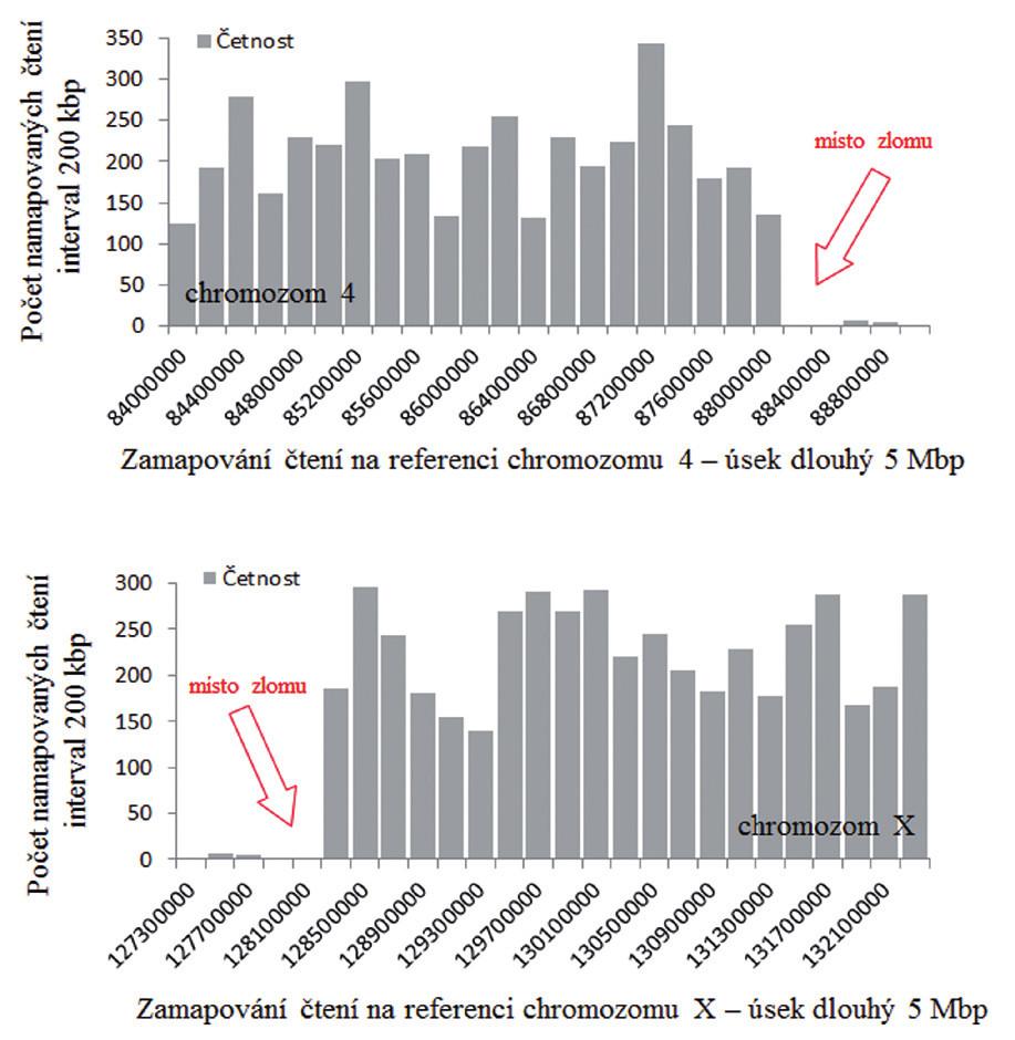 Zlom na derivovaném chromozomu 4 určený pomocí softwaru GeneAnalyzer, vyvinutého laboratoří Chambon.