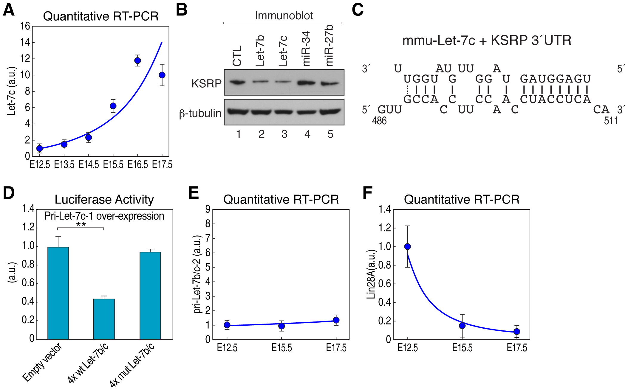 Let-7b and let-7c directly downregulate KSRP mRNA during pituitary development.
