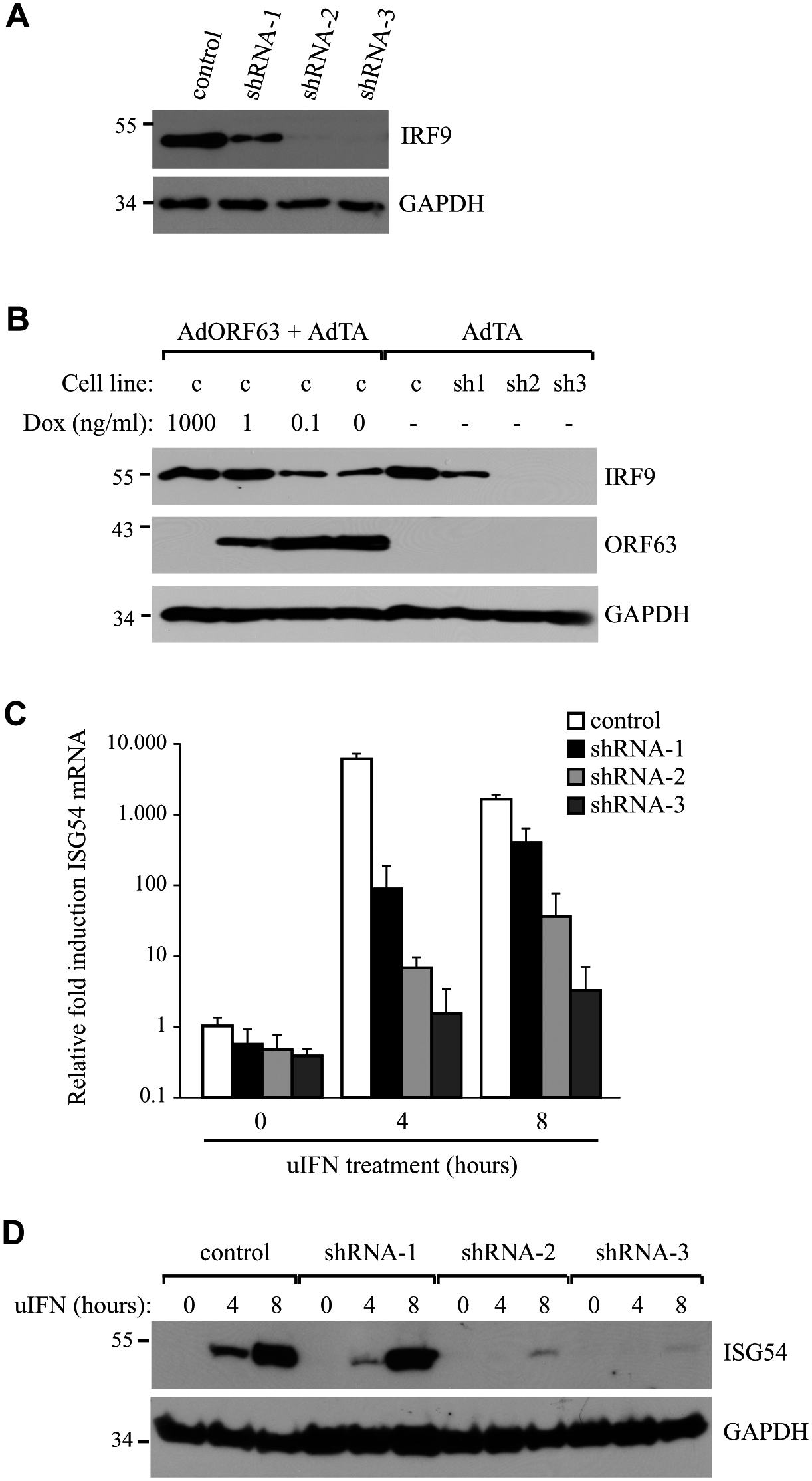 IRF9 is required for efficient ISG induction and overexpression of IRF9 overcomes JAK-STAT inhbition by ORF63.