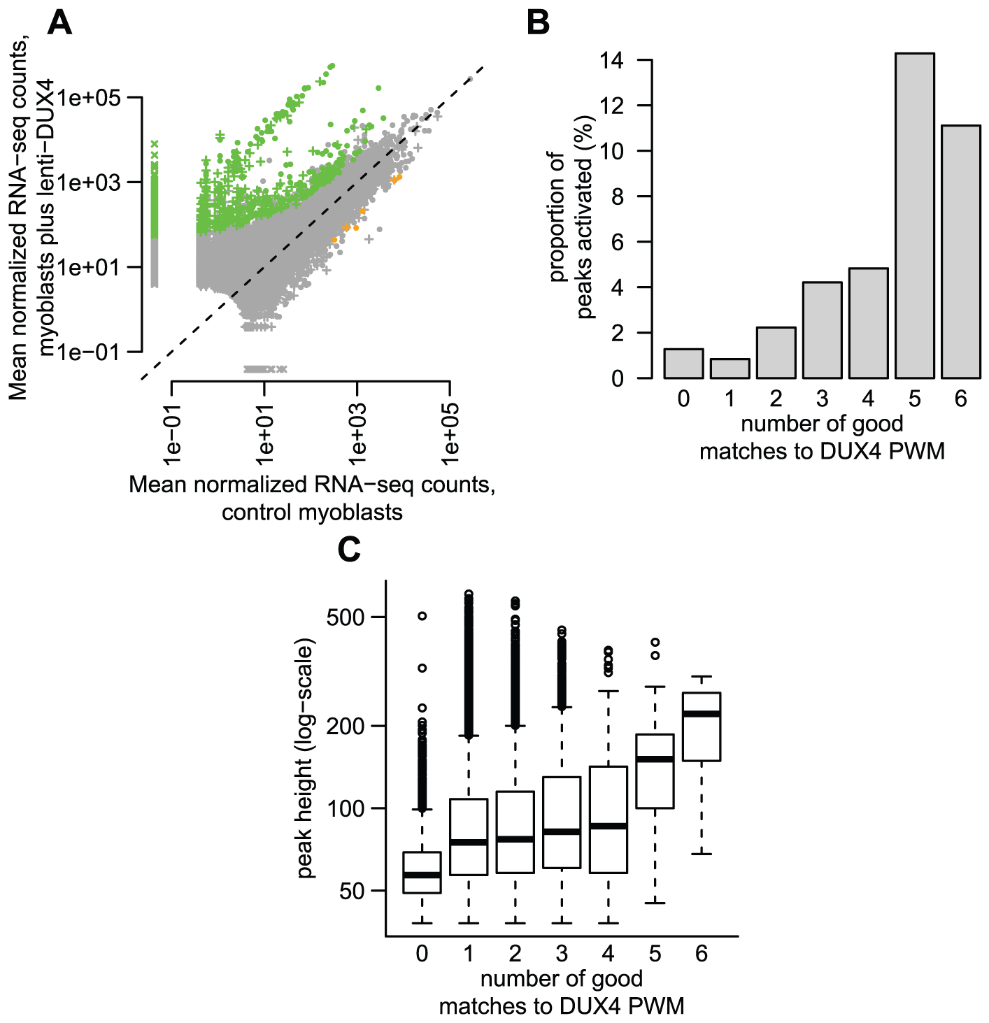 Some DUX4-bound repetitive elements are transcriptionally activated by DUX4.