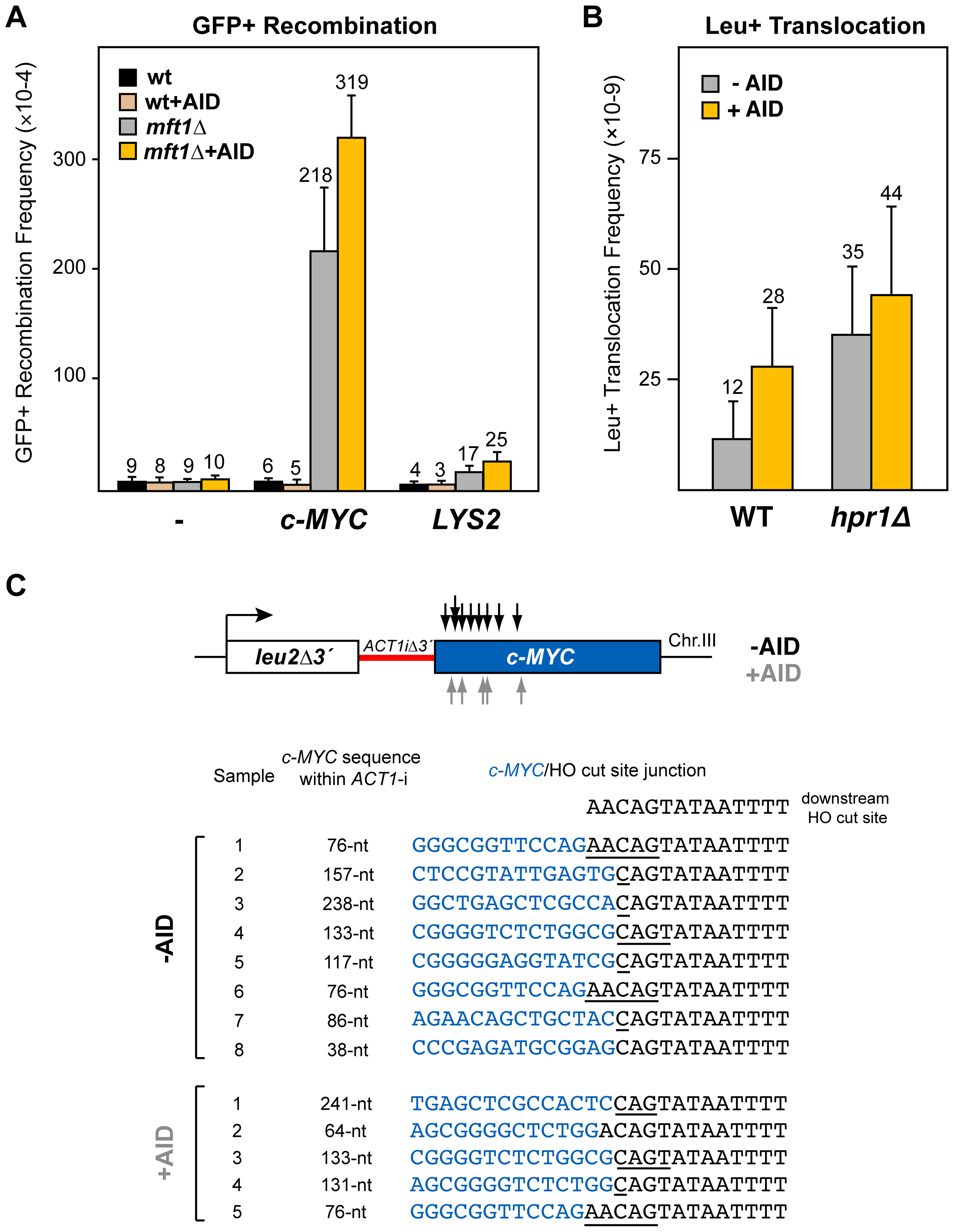 Analysis of recombinogenic potential of the <i>c-MYC</i> sequence.
