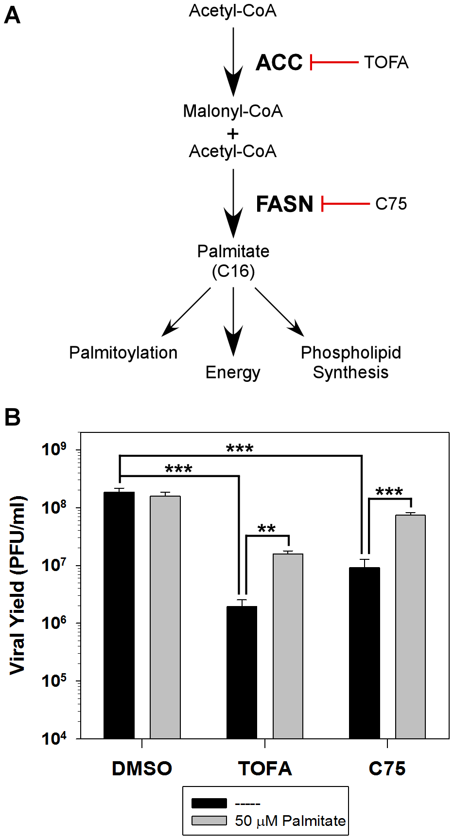 Analysis of the <i>de novo</i> fatty acid biosynthesis pathway during vaccinia infection.