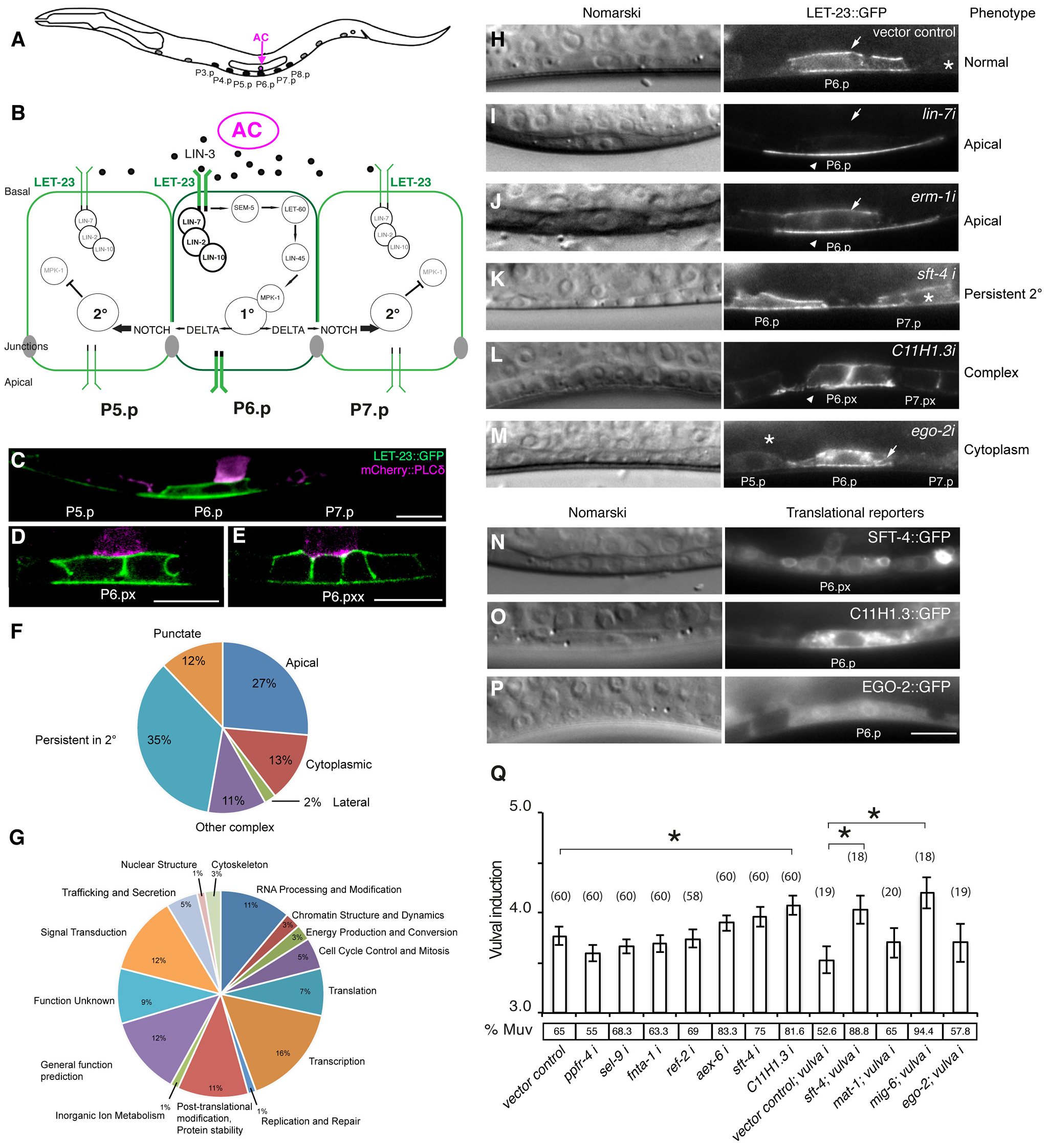 Identification of genes regulating LET-23 EGFR localization and signaling.