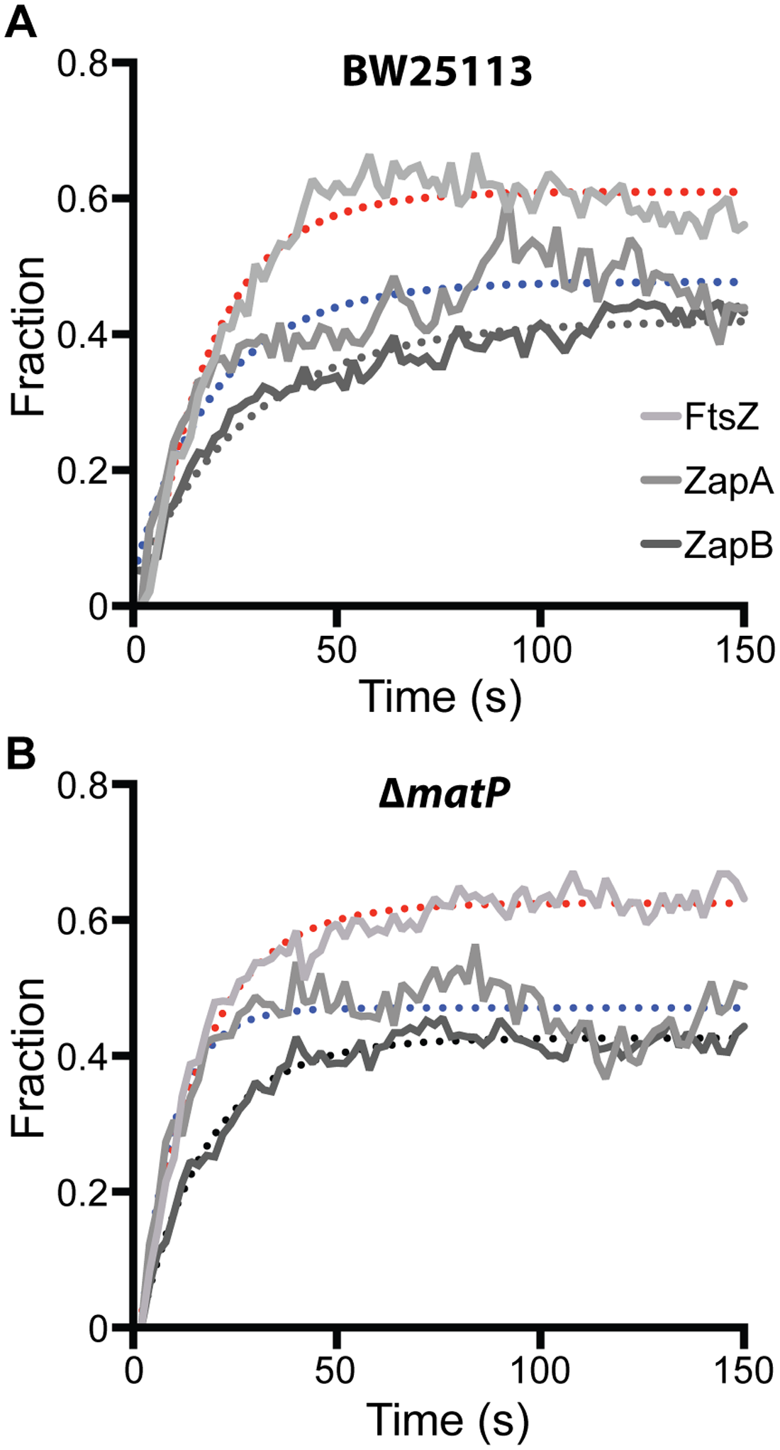FRAP measurements of FtsZ, ZapA and ZapB turnover rates in BW25113 and Δ<i>matP</i> cells.