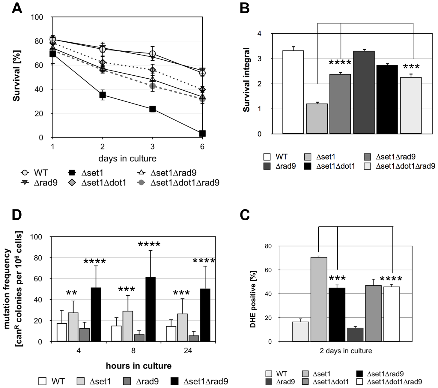 Disruption of <i>SET1</i> accelerates genome instability and Rad9p is required for apoptosis of <i><i>Δ</i>set1</i> cells.