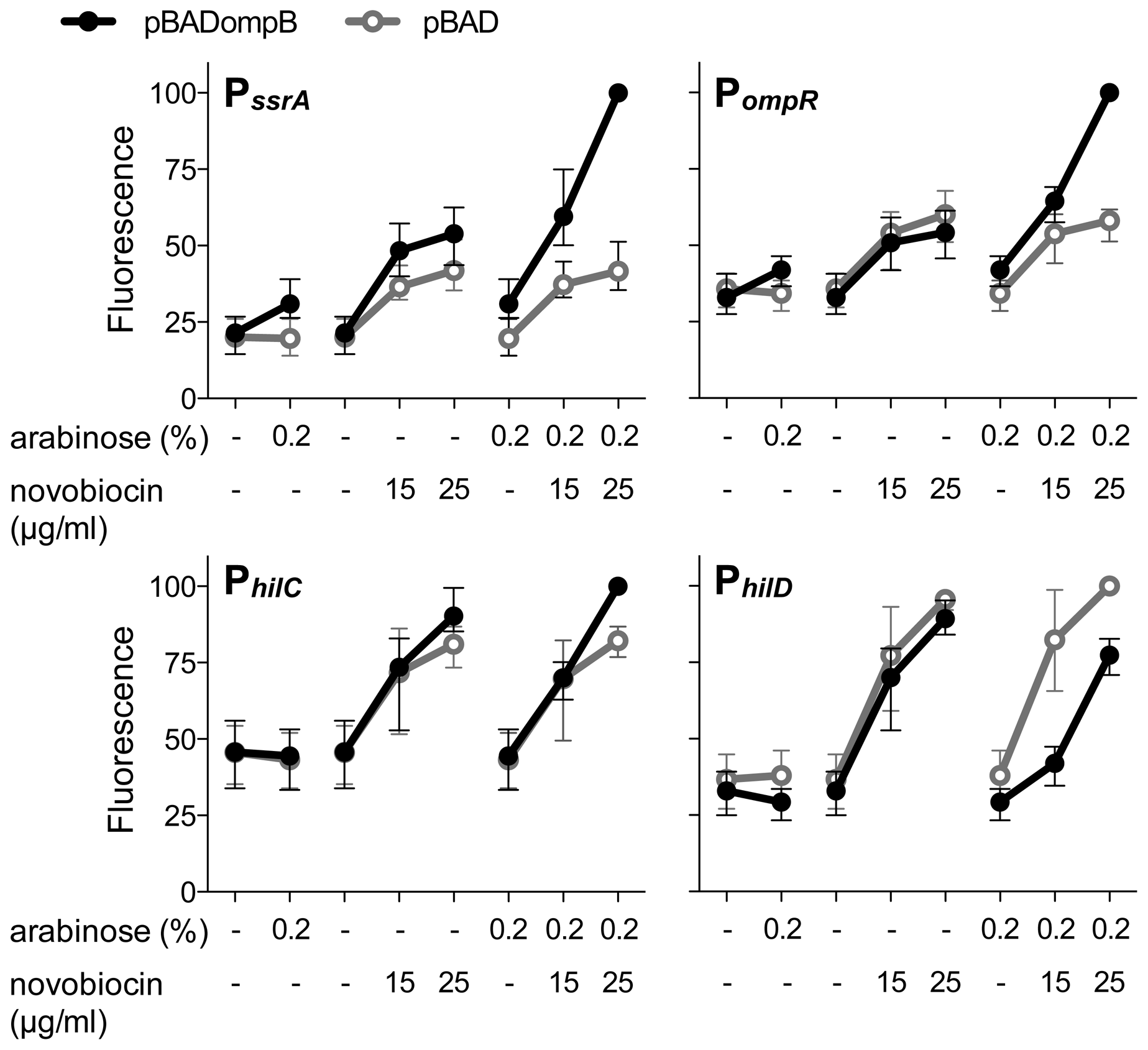 The relative contributions of OmpR and DNA relaxation to promoter activity.