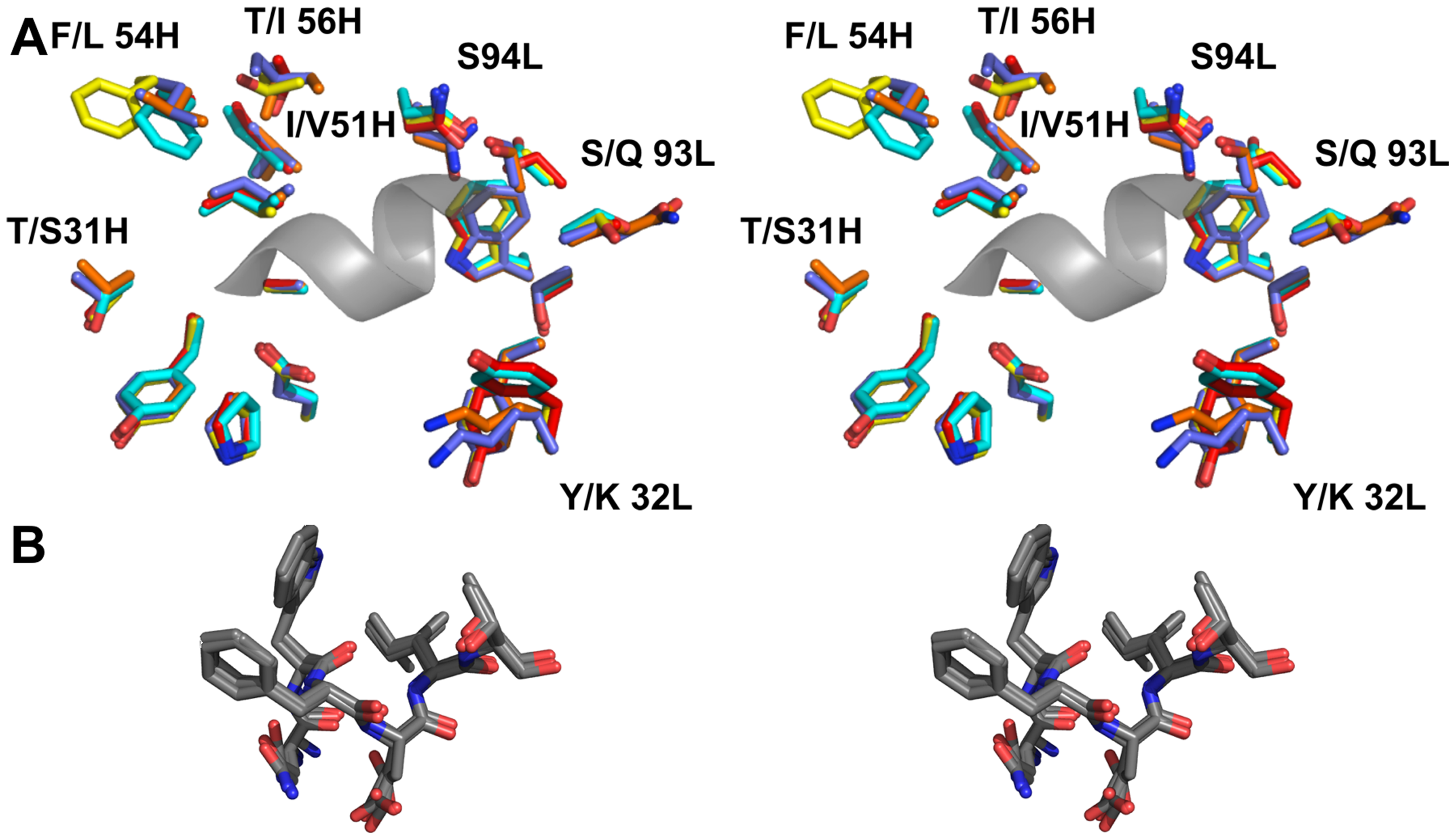 The epitope binding site is conserved between 4E10 and its GEPs.