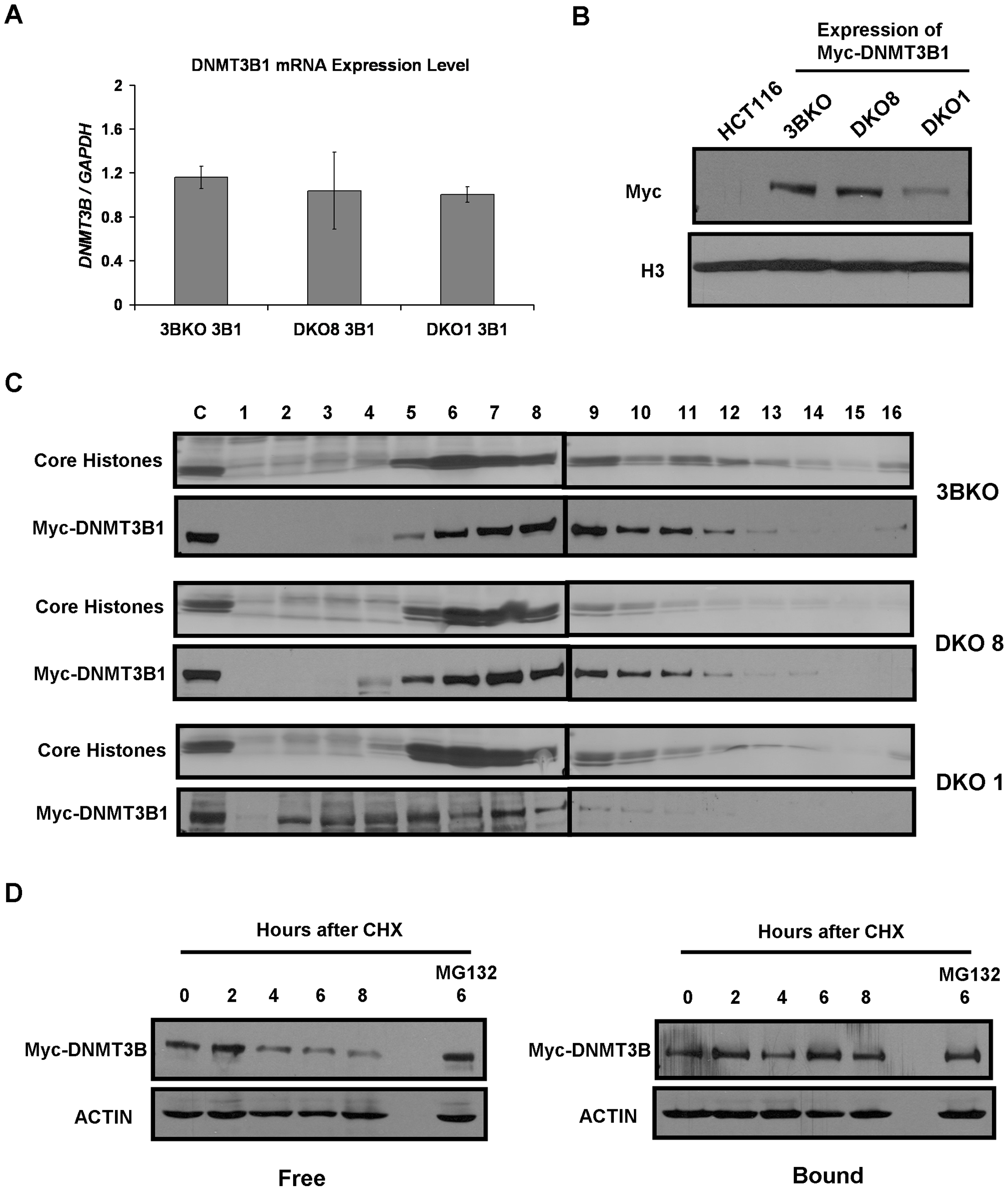 Weak nucleosome binding and selective degradation of unbound DNMT3B in the absence of elevated DNA methylation levels.