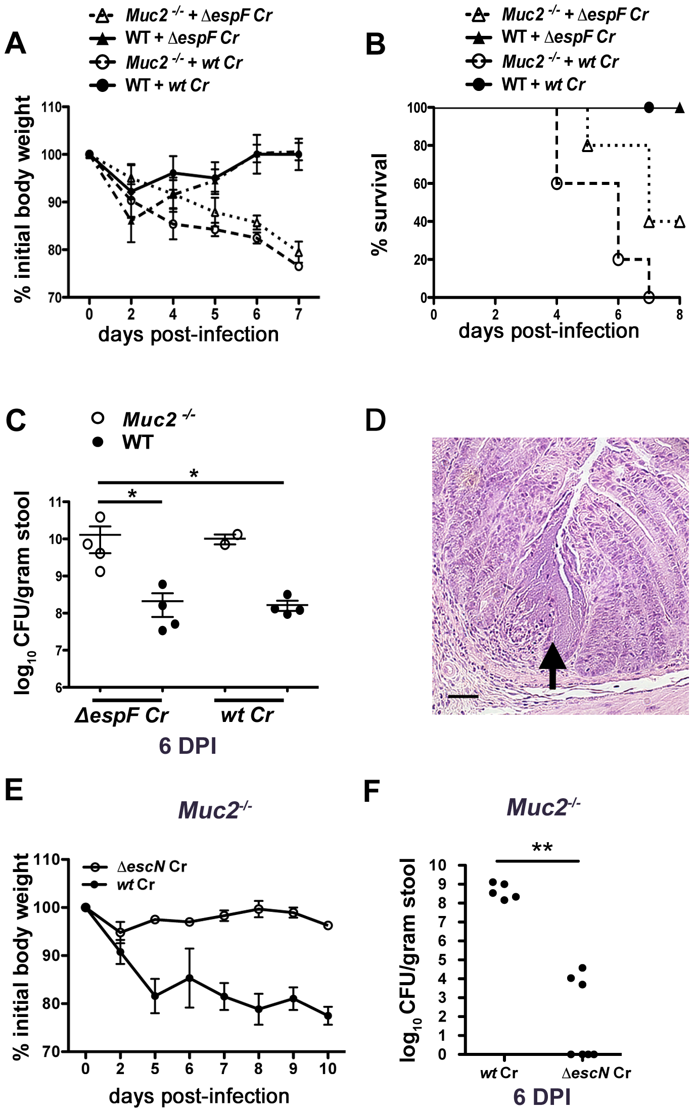 Muc2 deficiency renders mice more susceptible to attenuated strains, but susceptibility is T3SS dependent.