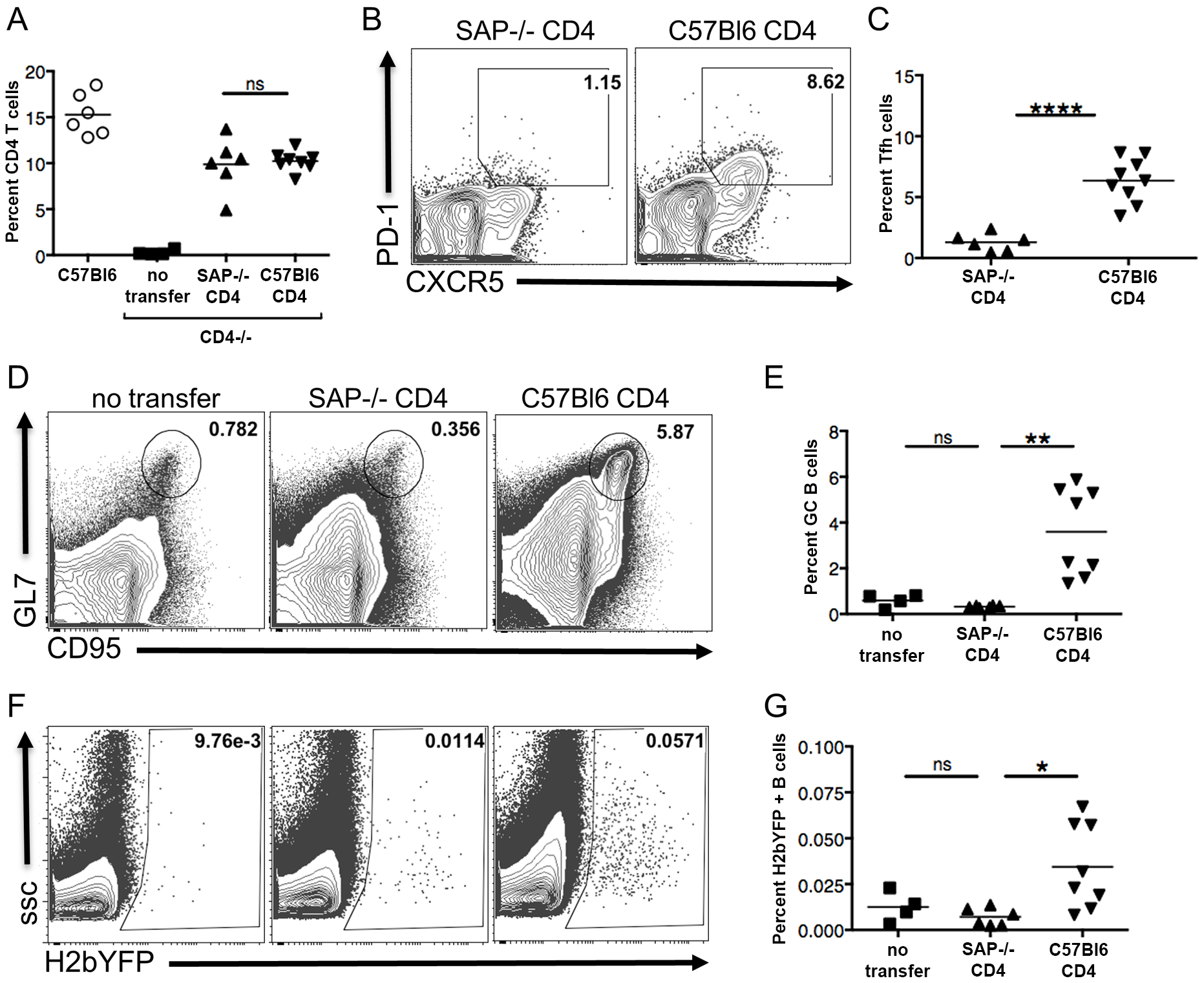 SAP expression in CD4 T cells is required for efficient establishment of MHV68 latency in B cells.