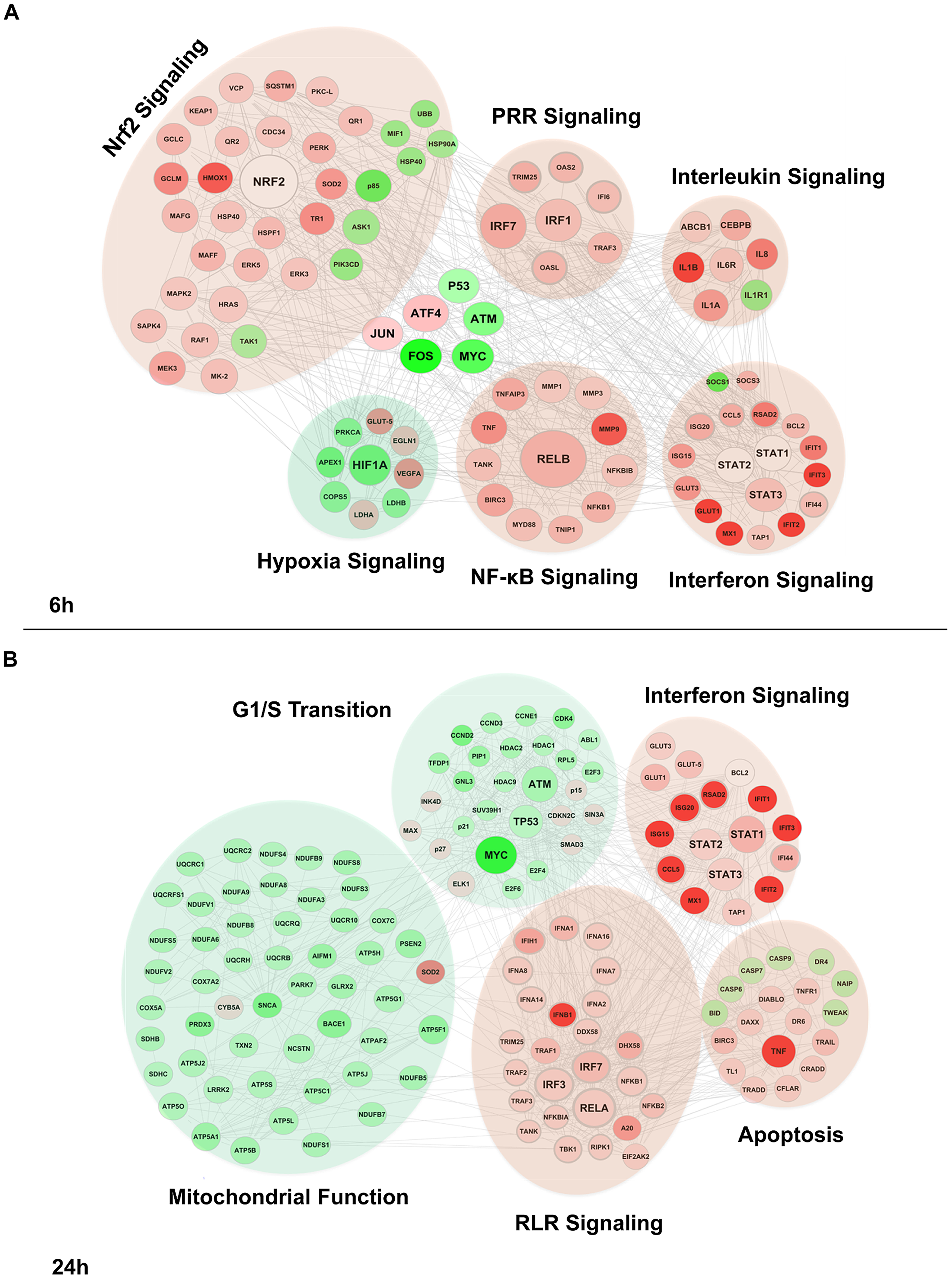Functional characterization of genes differentially expressed by DENV2 infection.